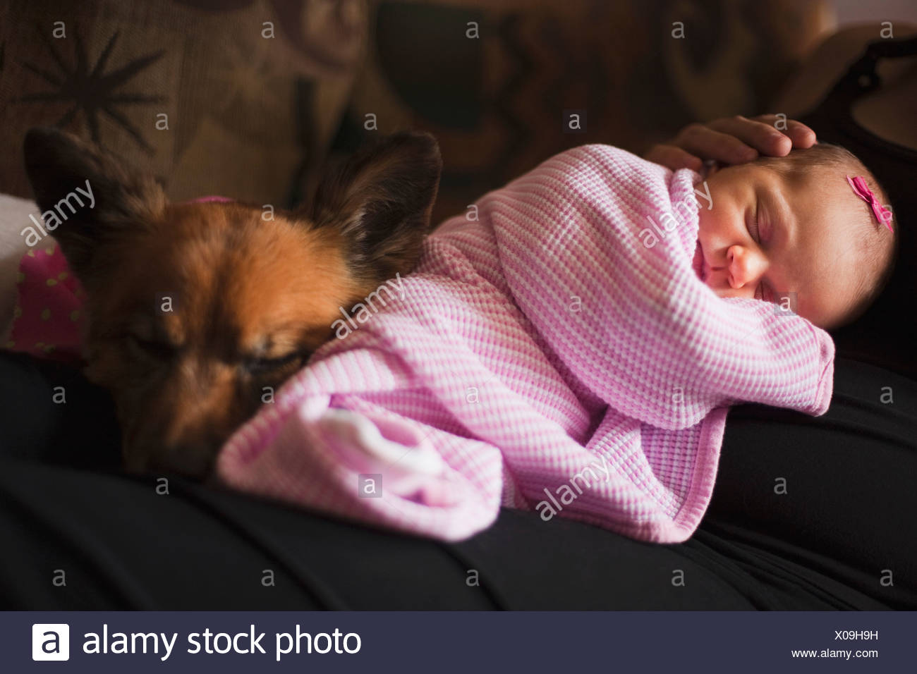 Nashville, Tennessee, United States Of America; A Mother Holding Her Infant Girl With The Pet Dog Close - Stock Image