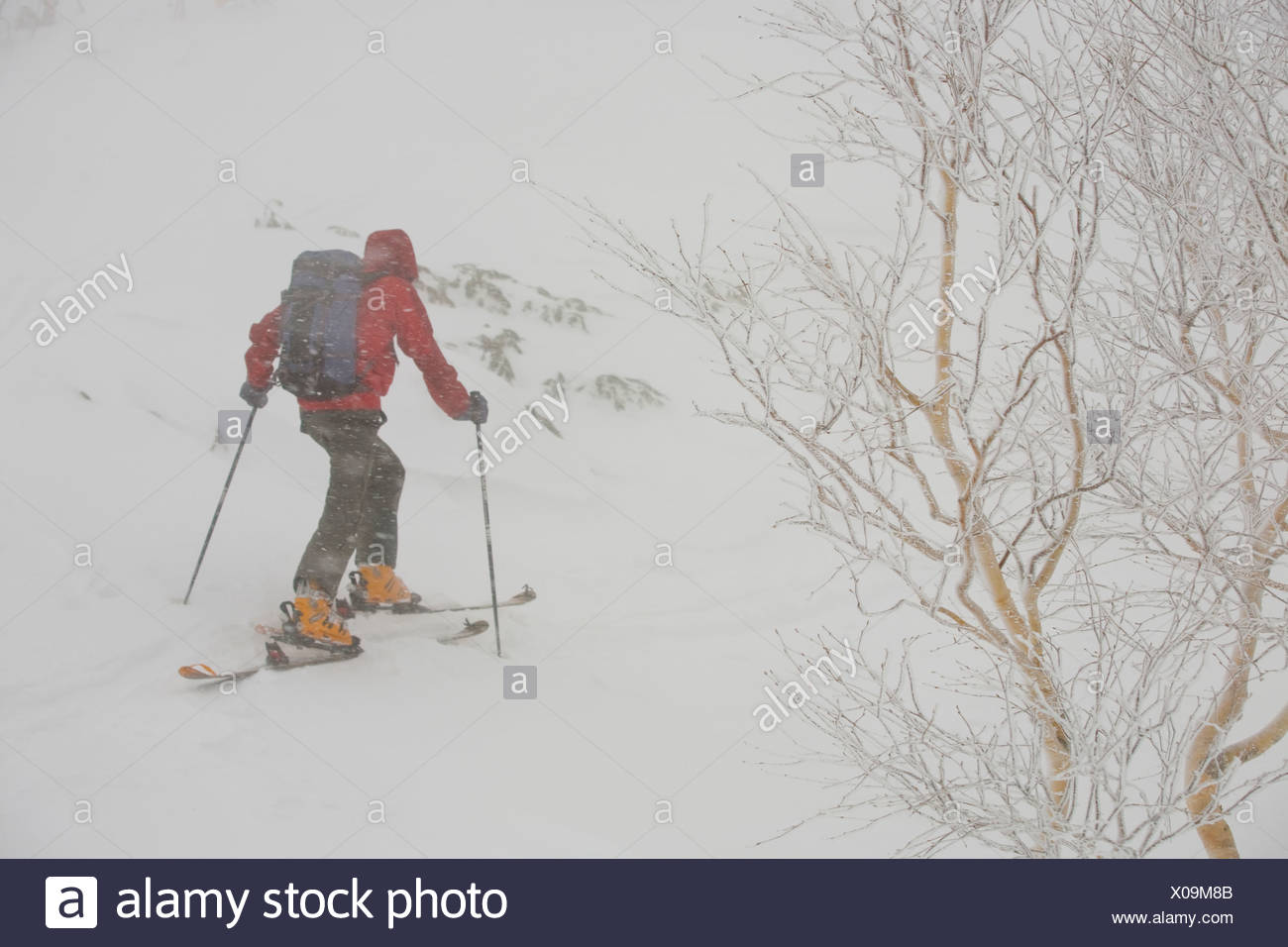 A skier uptracking in snowy conditions in Furanodake backcountry, Hokkaido, Japan - Stock Image
