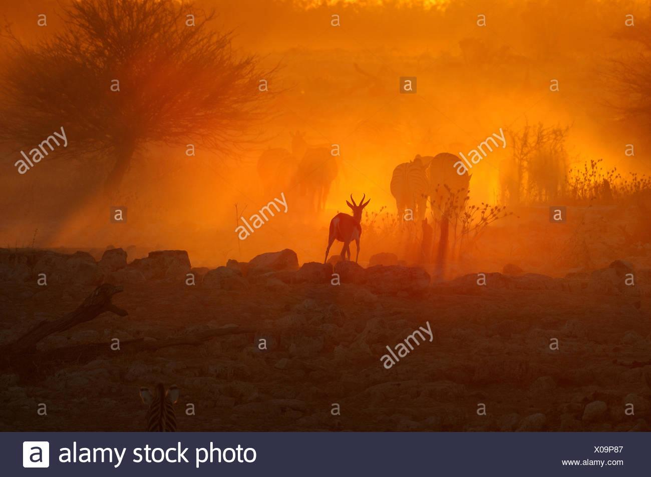 Sunset at Okaukeujo, Namibia - Stock Image