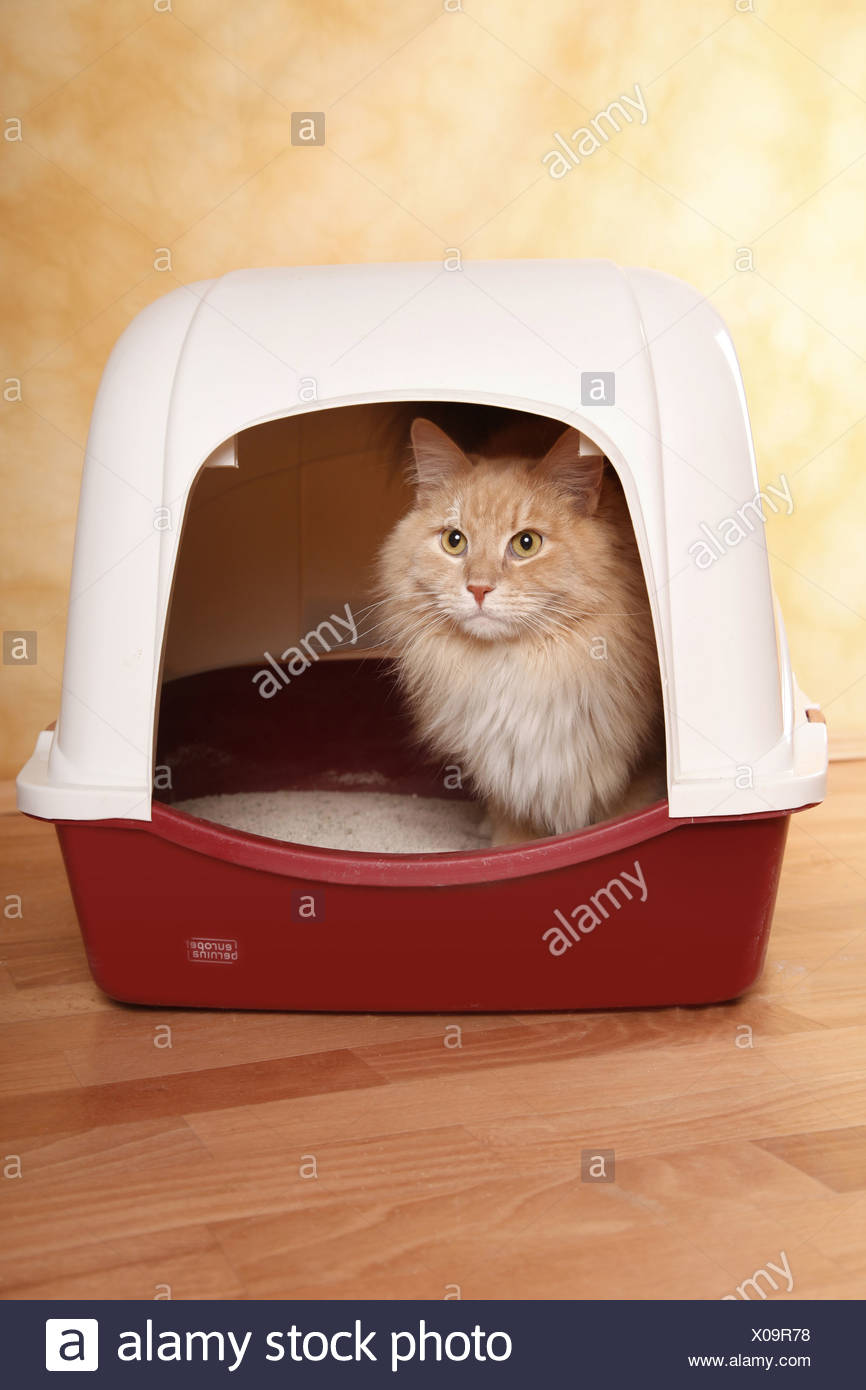 cat litter tray stock photos cat litter tray stock images alamy. Black Bedroom Furniture Sets. Home Design Ideas