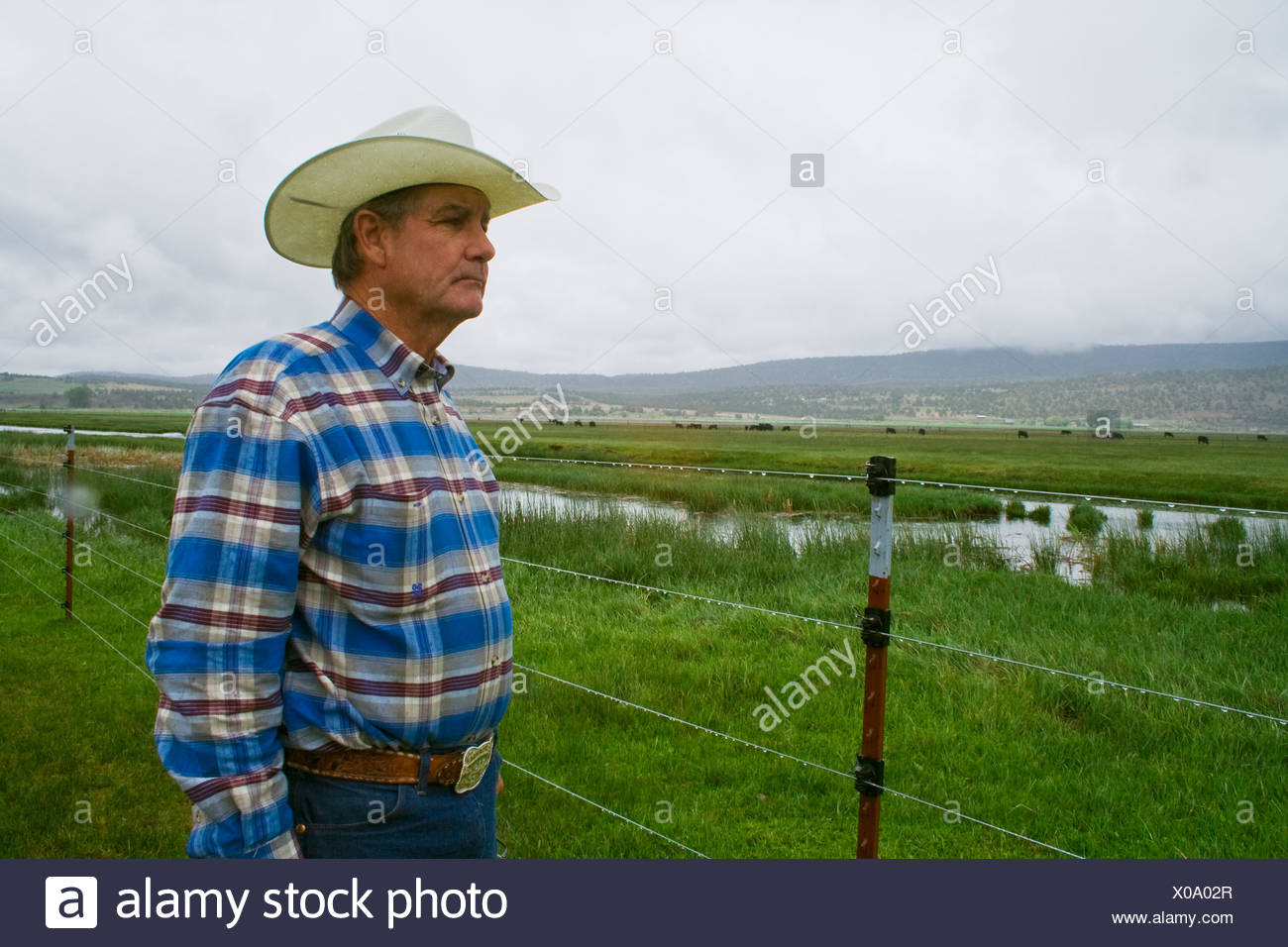 Livestock - A cattle rancher / beef producer surveys one of his pastures on a stormy day / Klamath Basin, California, USA. - Stock Image
