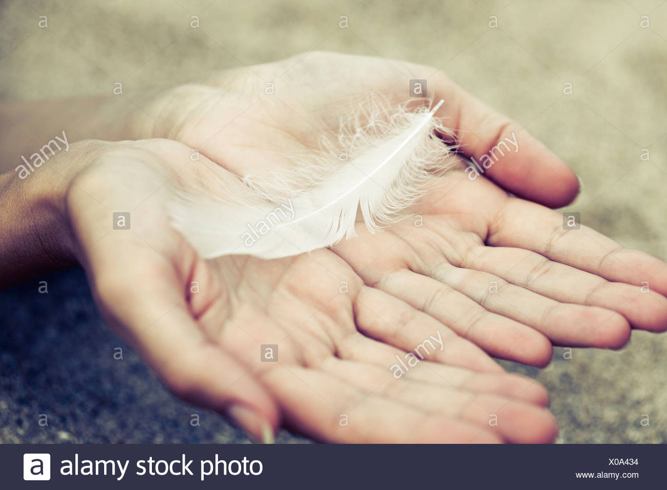Hands holding a white feather. Stock Photo