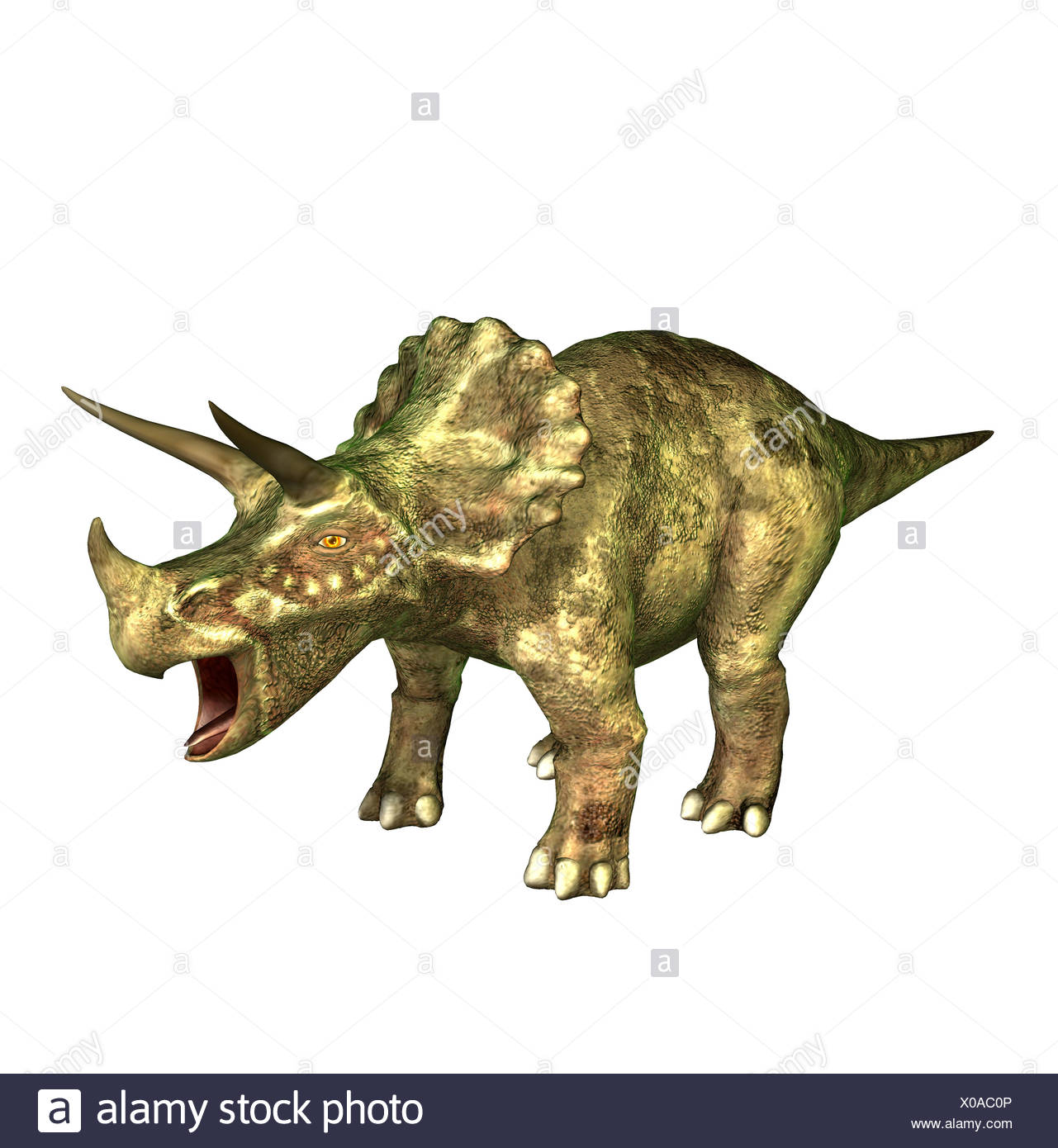The Triceratops is called three-horn and about 9 m long and in the Cretaceous period occurred. The Triceratops is one of theStock Photo