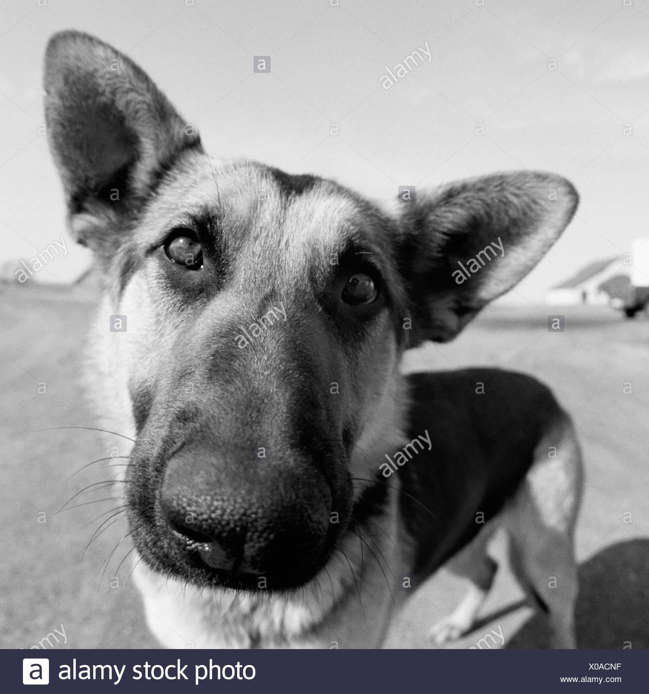 Close-up of a dog - Stock Image