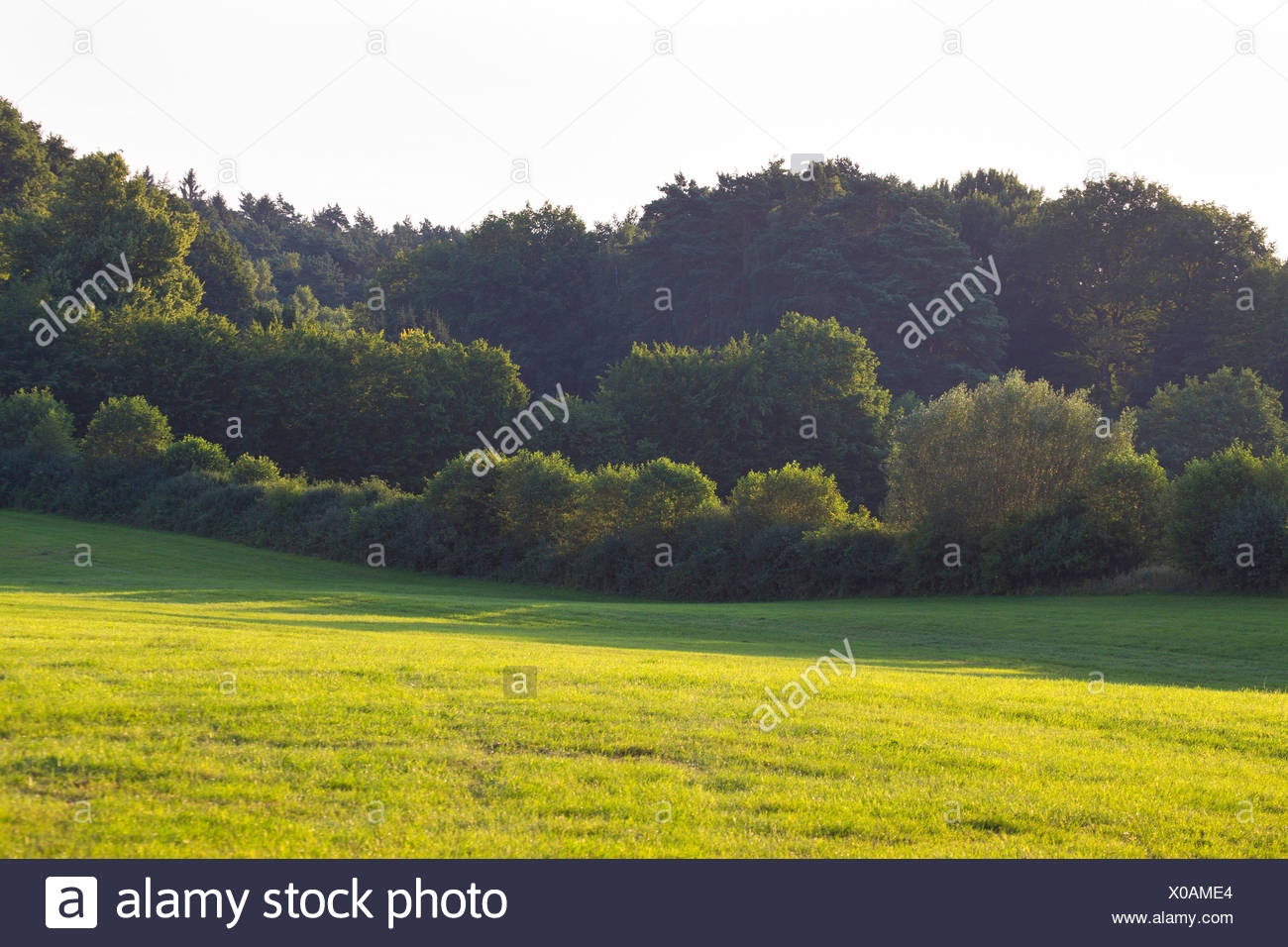 pastures with hedge banks, Germany, Schleswig-Holstein - Stock Image