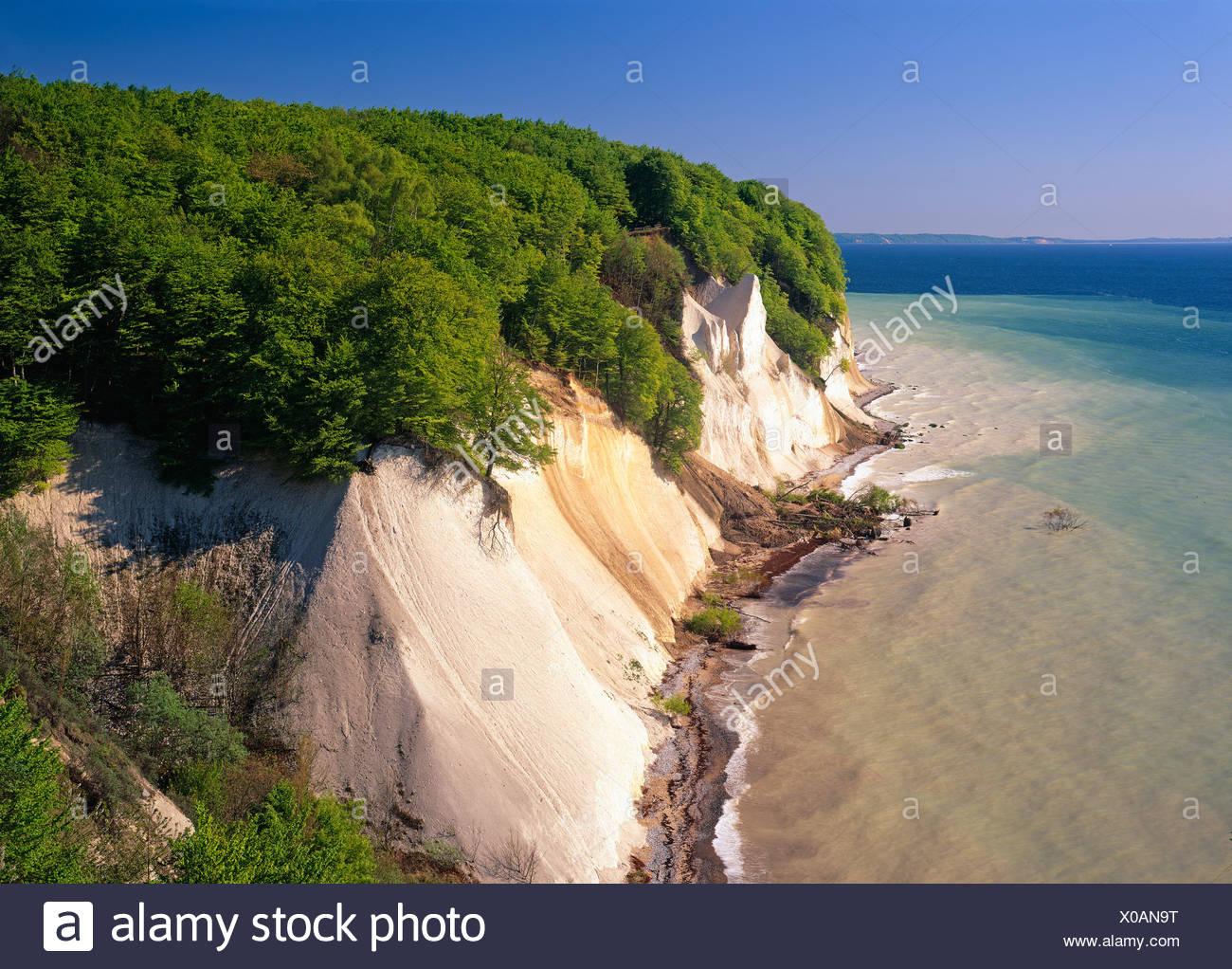 Chalk cliffs on the coast, Jasmund National Park, Ruegen, Mecklenburg-Western Pomerania, Germany, Europe Stock Photo