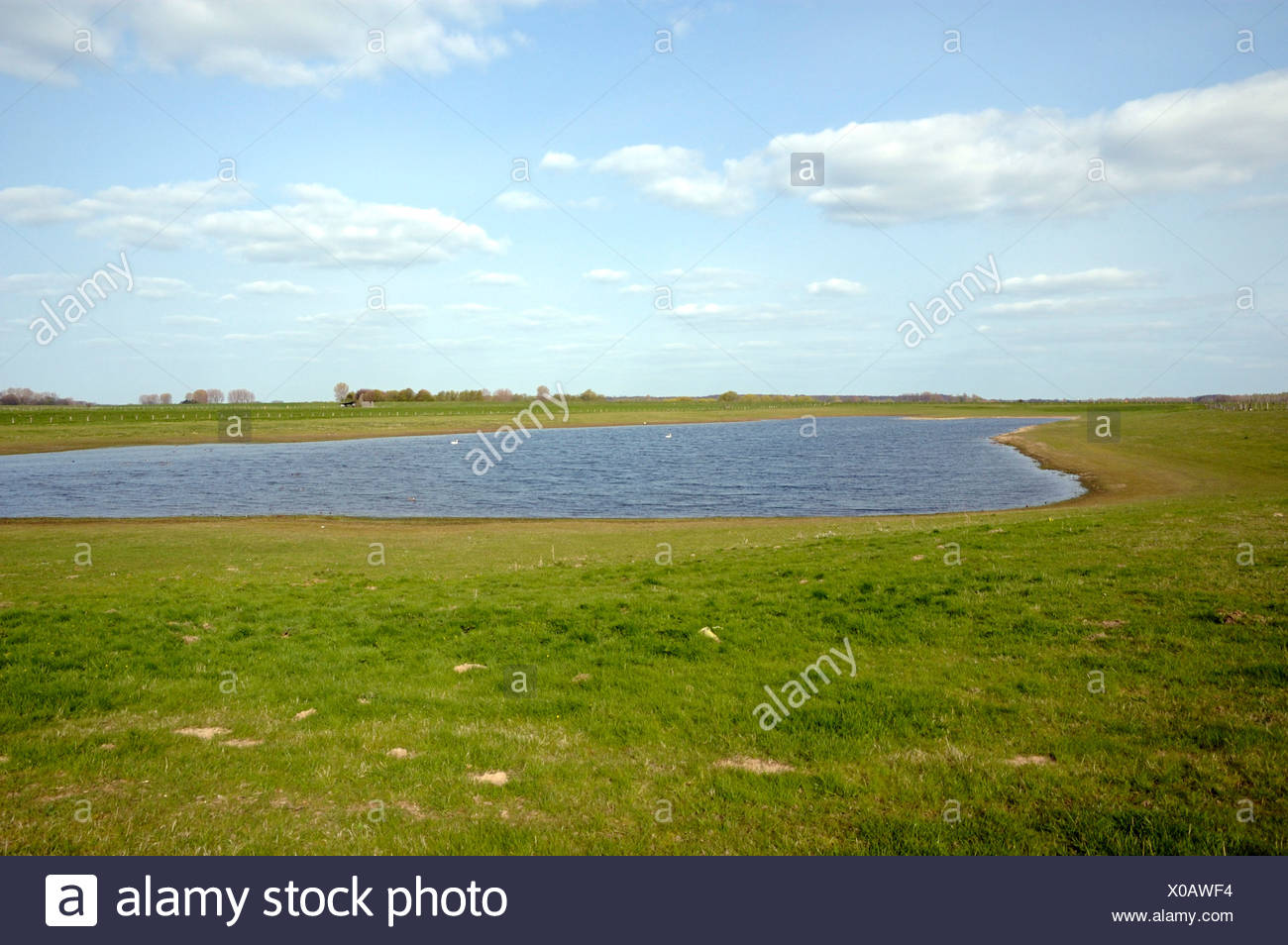 meadow at Rhine river on Bislicher Insel, Germany, North Rhine-Westphalia, Nature Reserve Bislicher Insel - Stock Image