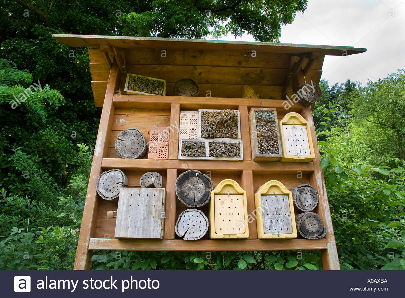 insect hotel, Germany - Stock Image