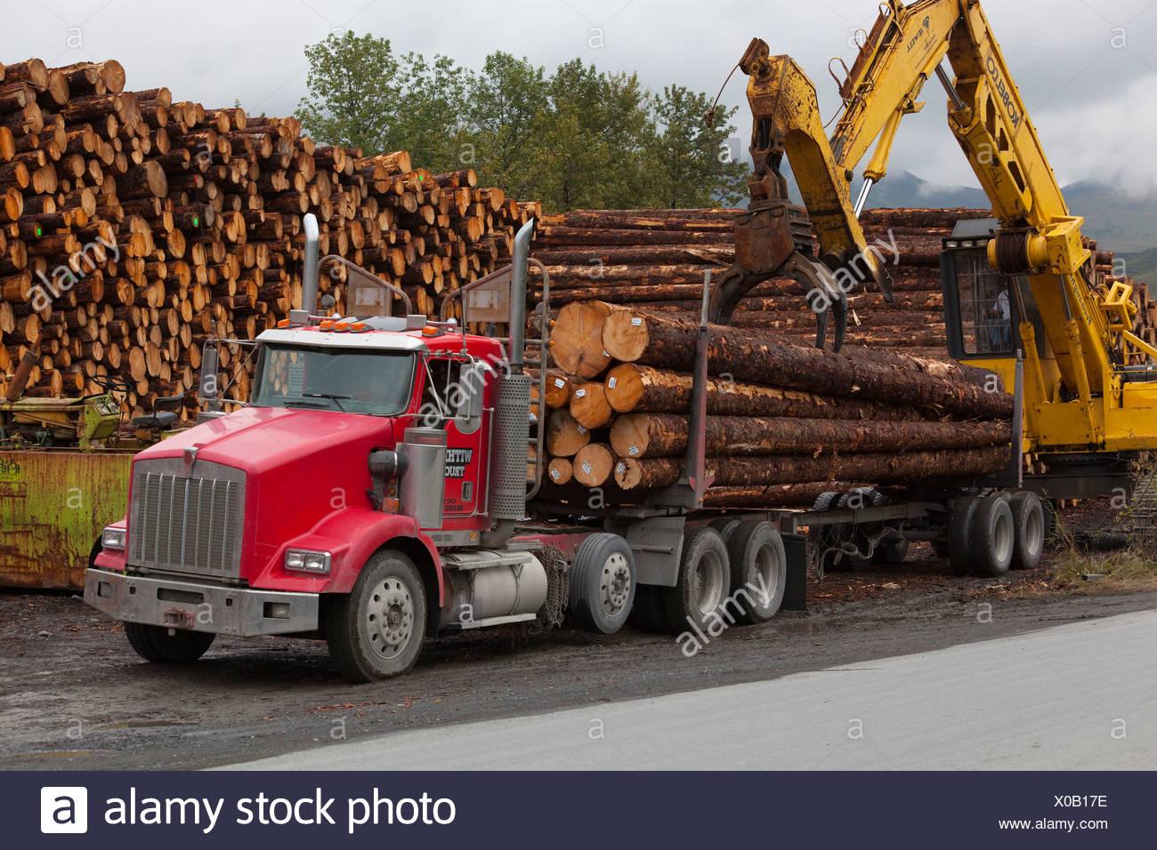 Forwarder Loading Sitka Spruce Logs Harvested At Chiniak Onto A Logging Truck, Kodiak Island, Southwest Alaska, Autumn Stock Photo