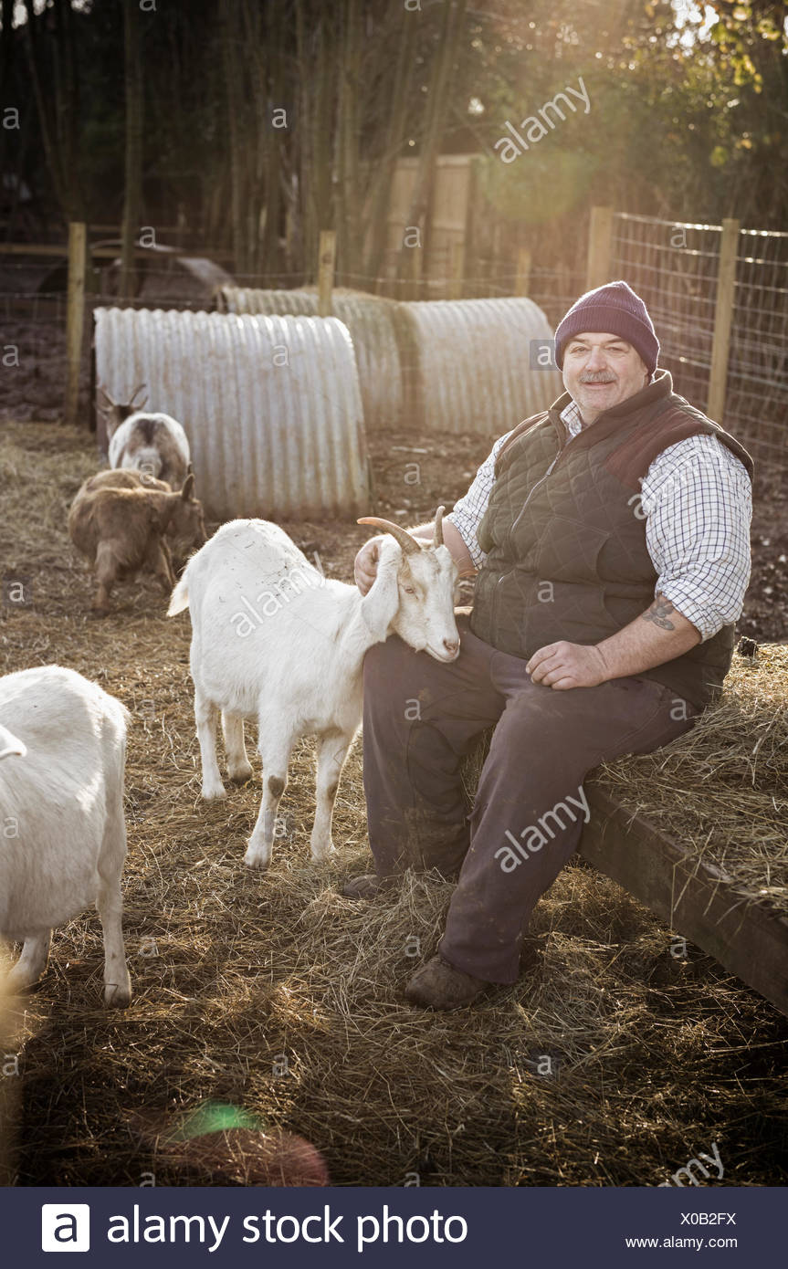 A farmer in a waistcoat and working clothes seated on a haybale, patting a white goat. - Stock Image