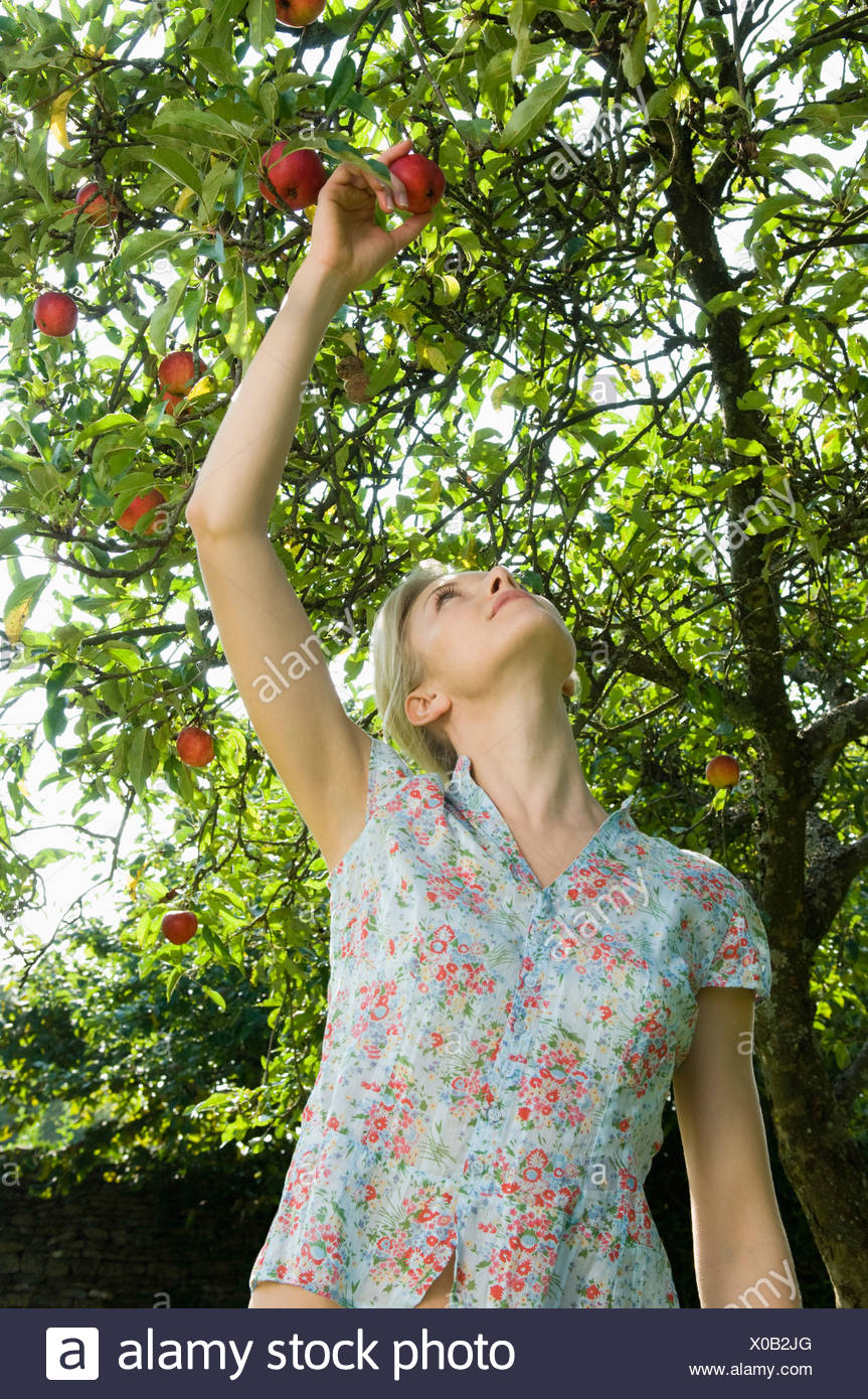 Woman and apple tree - Stock Image