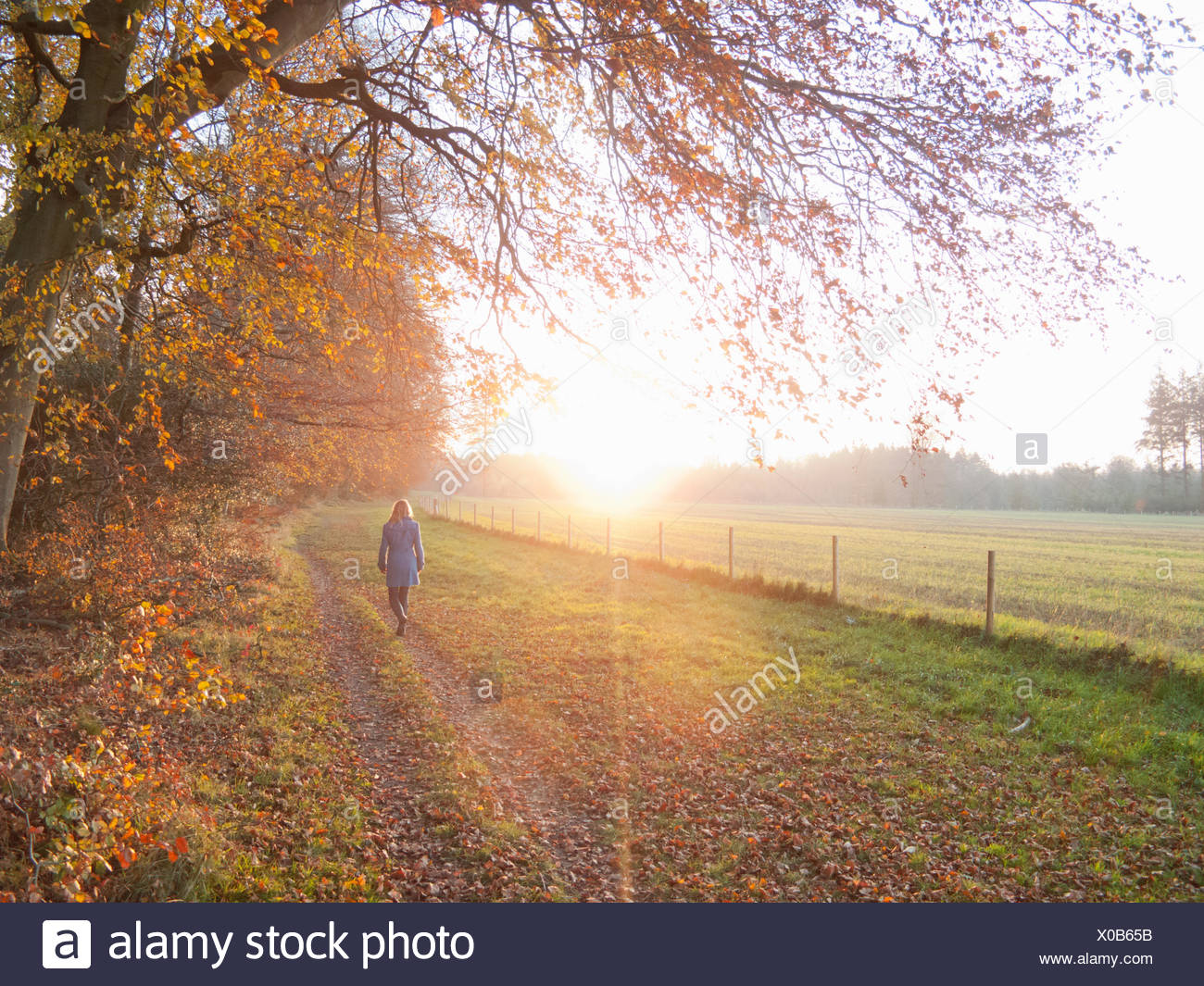 Woman walking in countryside in the autumn - Stock Image