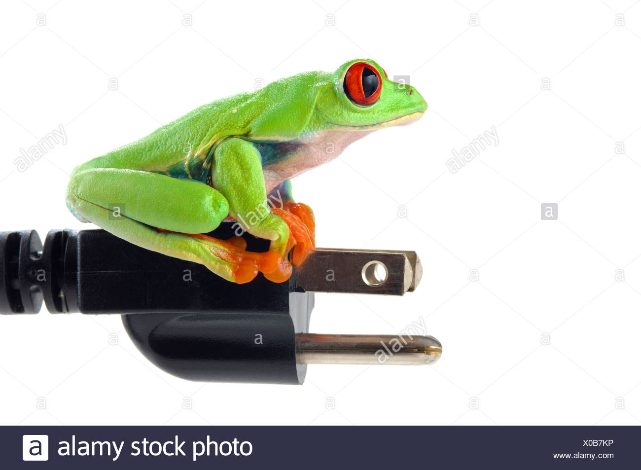 Red-eyed tree frog on electrical plug Stock Photo