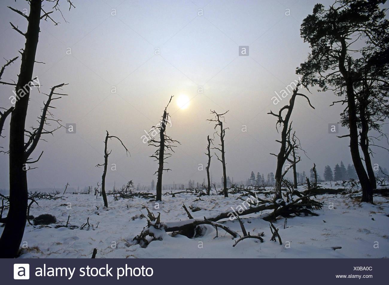 dead trees in front of an approaching winter storm, Belgium, Baraque de Michel, Hohes Venn-Ostbelgien Stock Photo