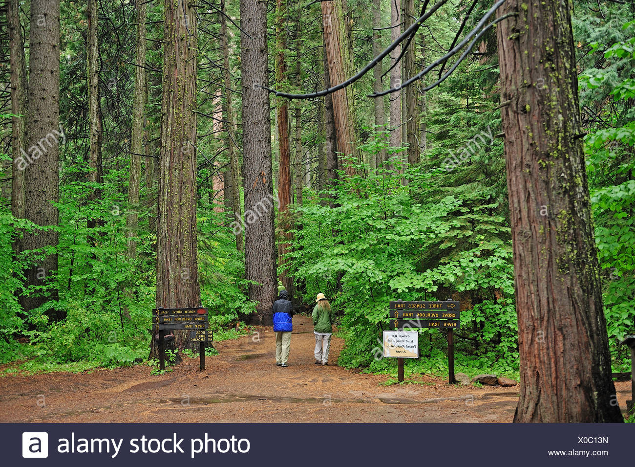 Family, North Grove Trail, Calaveras Big Tree, State Park, California, USA, United States, America, trees, wood, forest - Stock Image