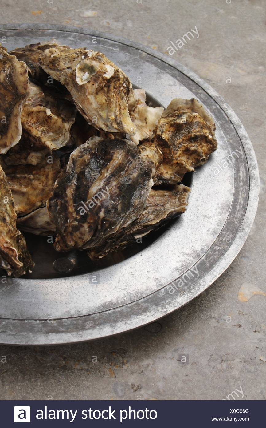 fresh closed oysters - Stock Image