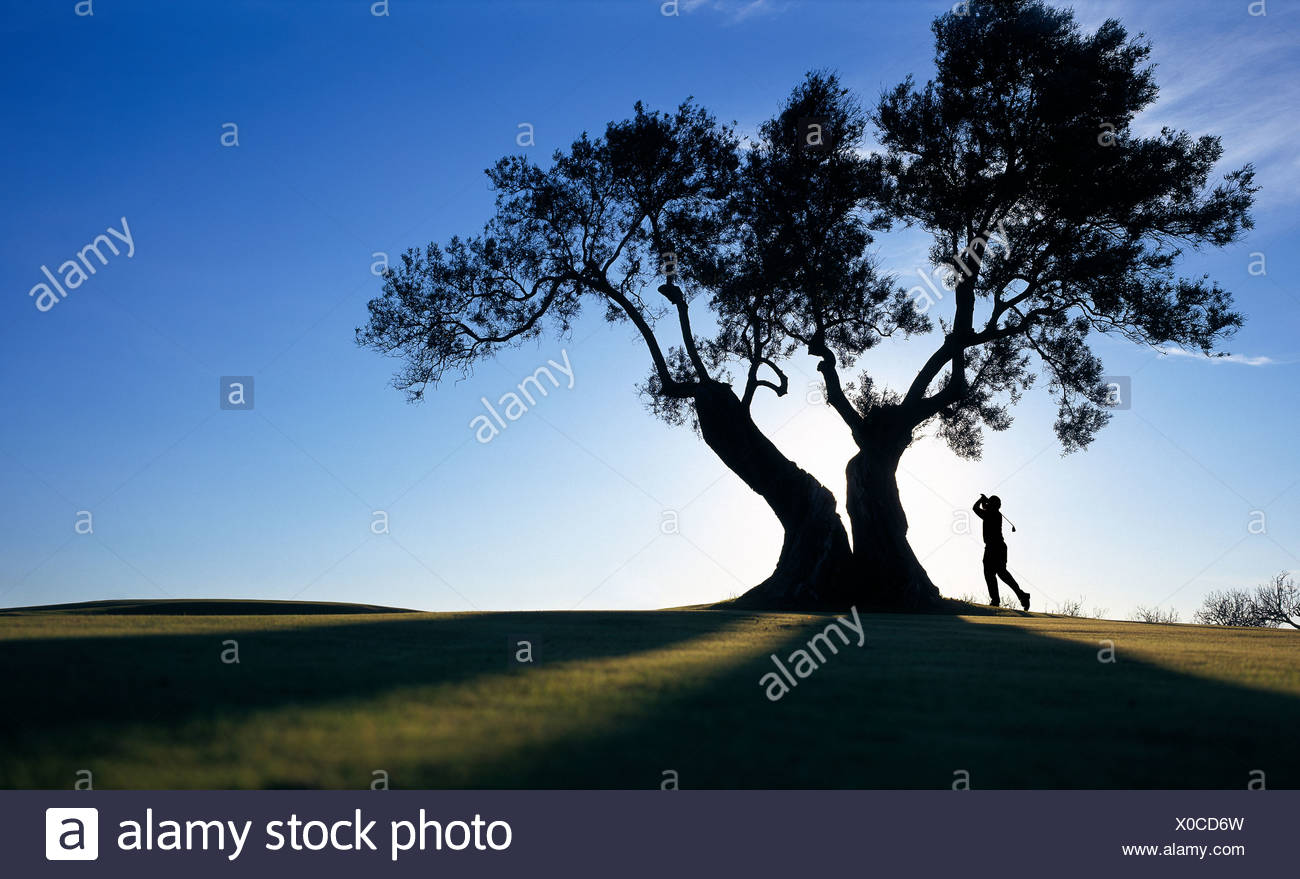 Person playing golf under tree - Stock Image