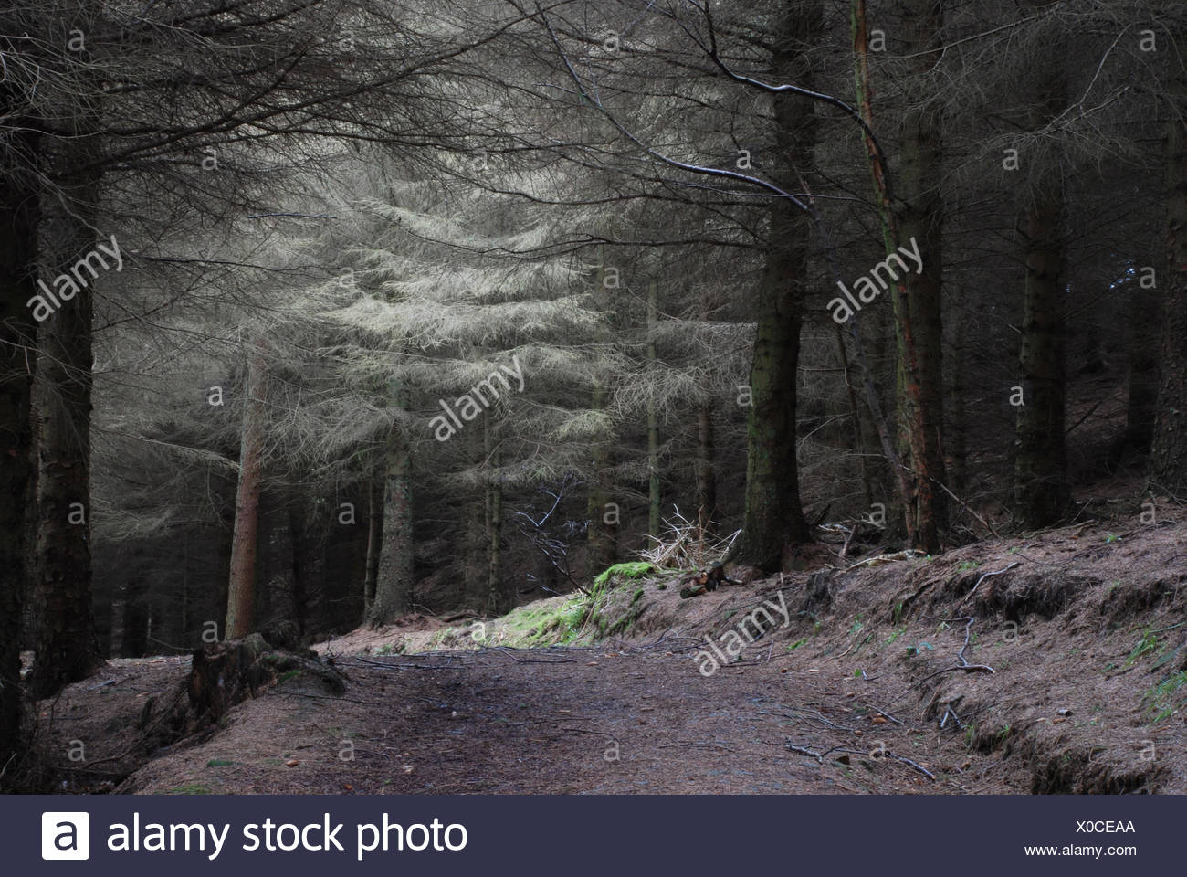 forest path with soft light - Stock Image