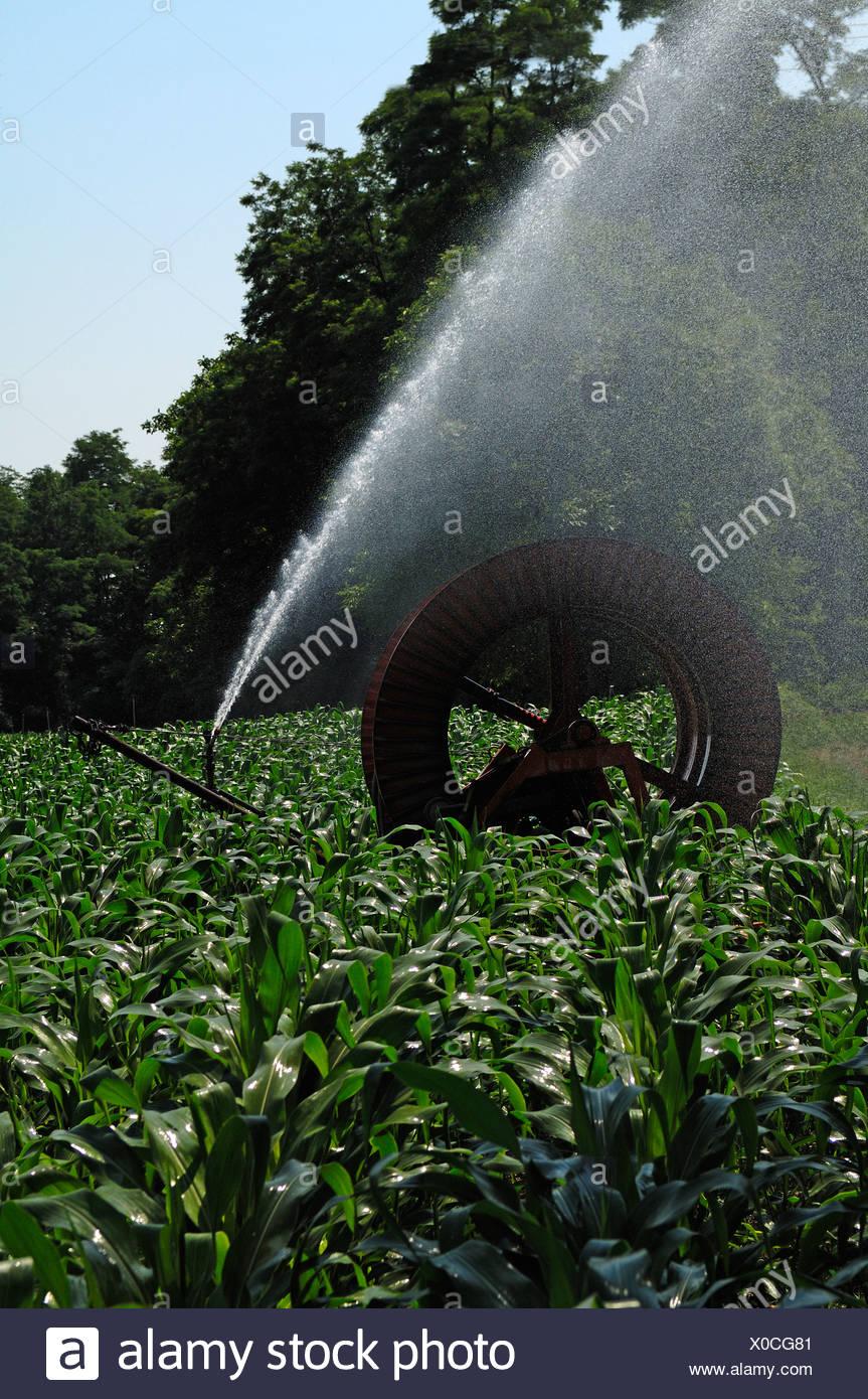 Irrigation of a corn field by water pump, Marckolsheim, Alsace, France, Europe - Stock Image