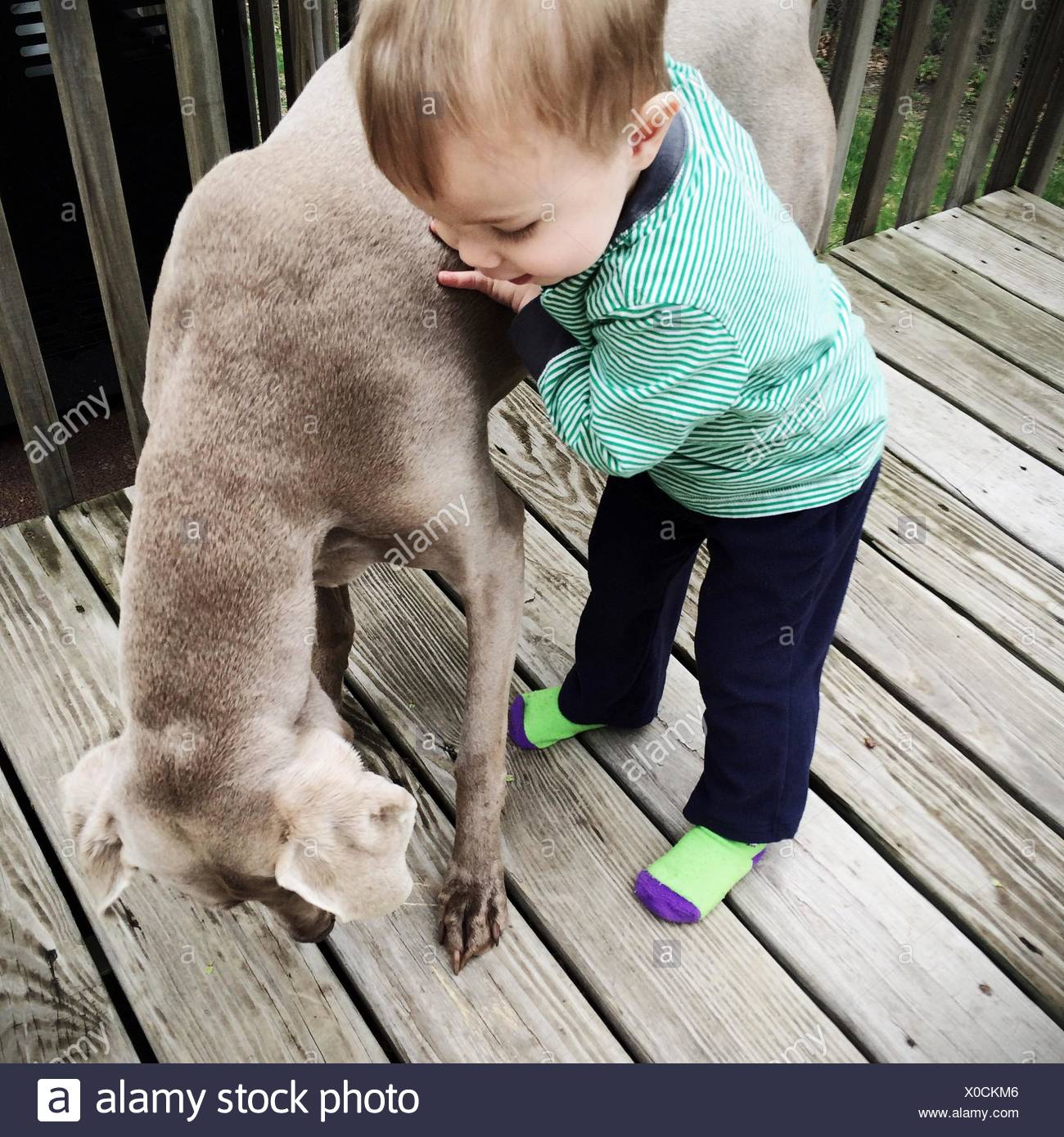 Boy Playing With Dog - Stock Image