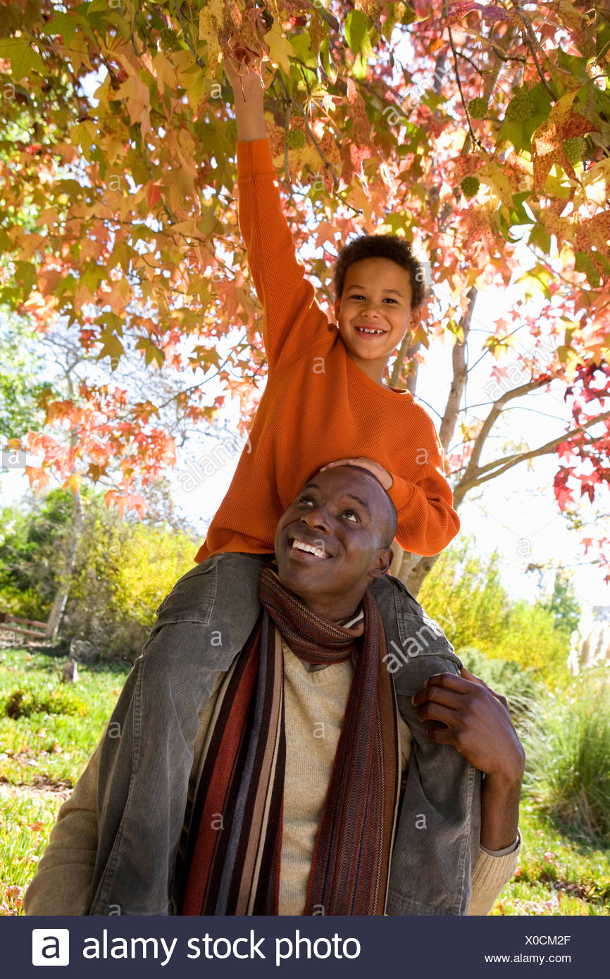 Father carrying son 7 9 on shoulders in autumn park boy grabbing overhanging branch smiling portrait tilt - Stock Image