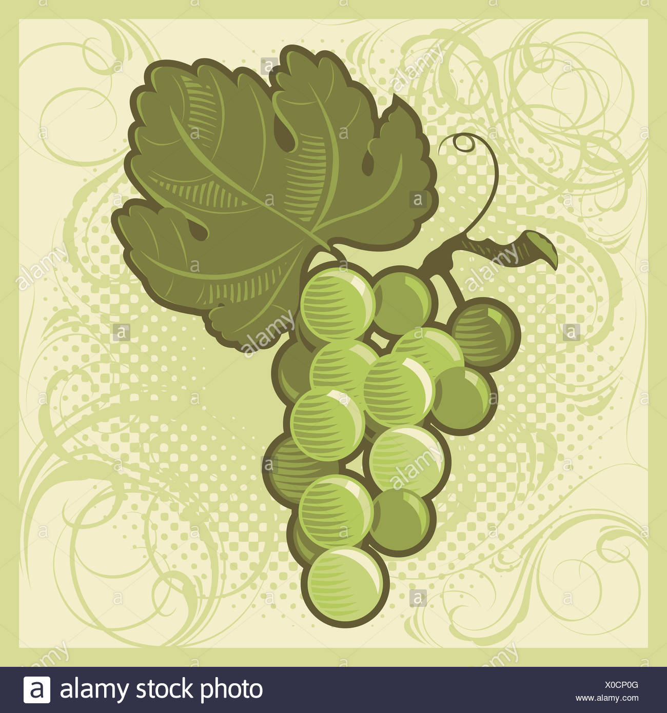 Retro-styled green grape bunch - Stock Image