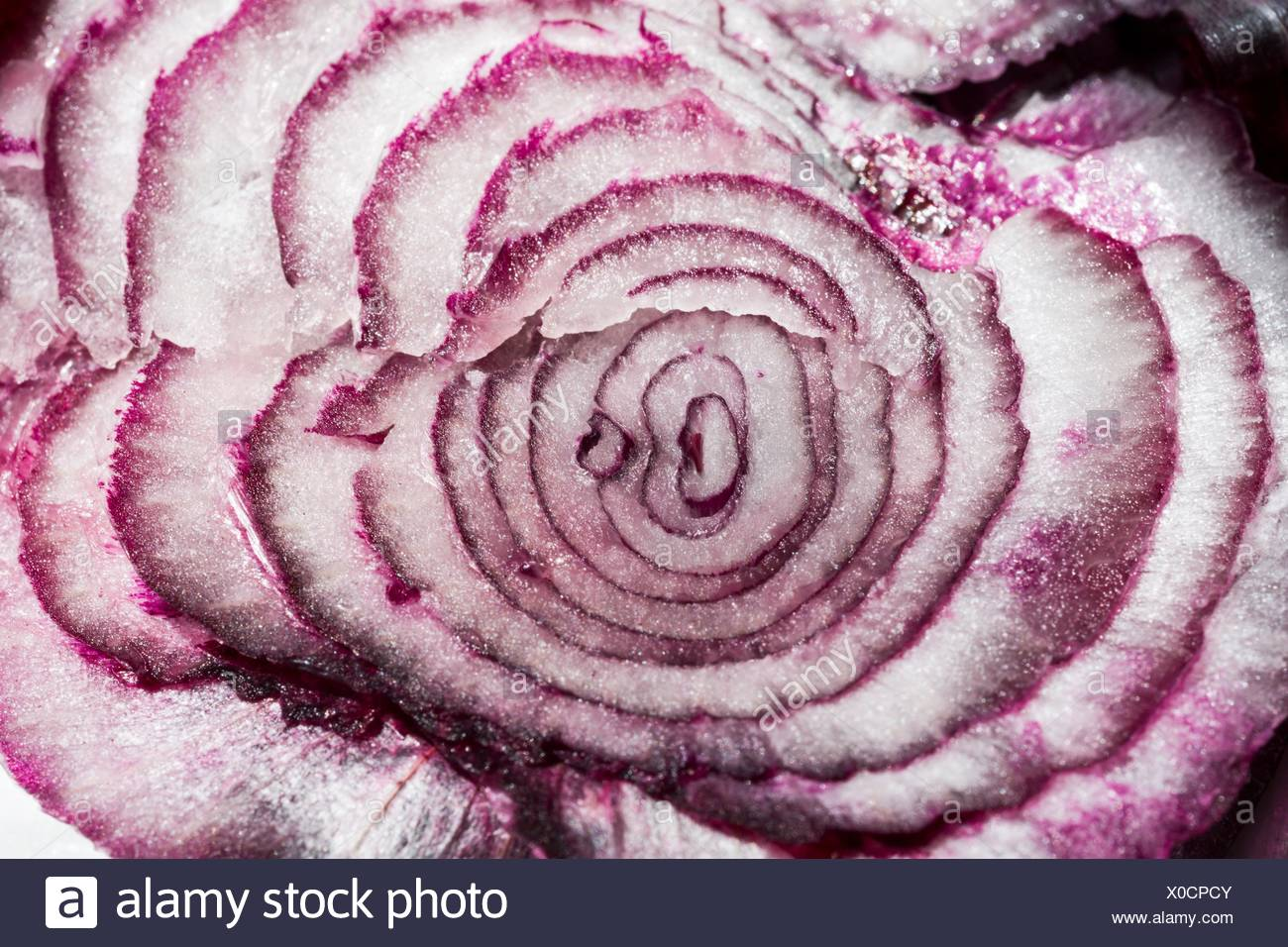 Cross section of a red onion. - Stock Image