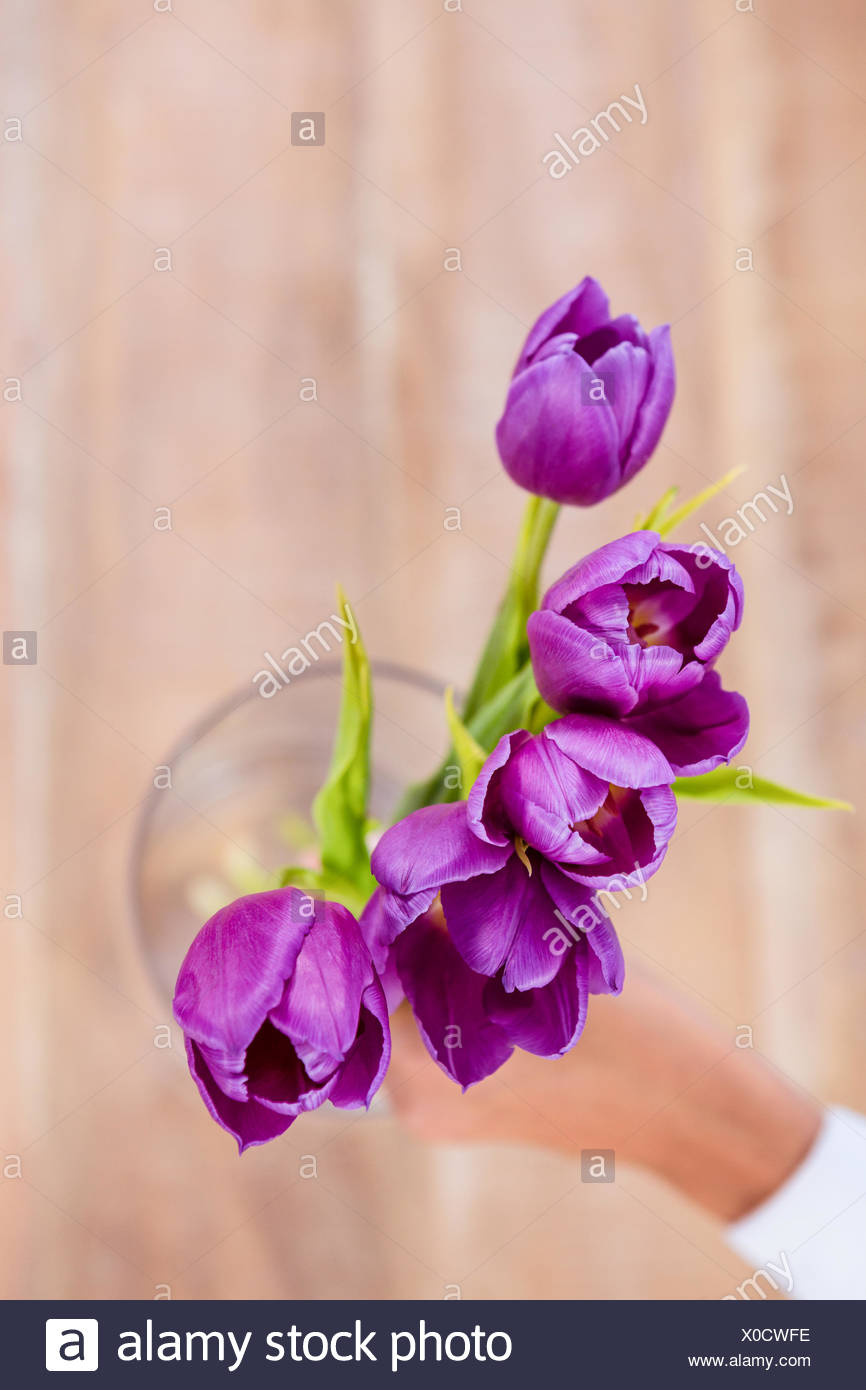 Woman putting a flowers in a vase & Woman putting a flowers in a vase Stock Photo: 275649346 - Alamy