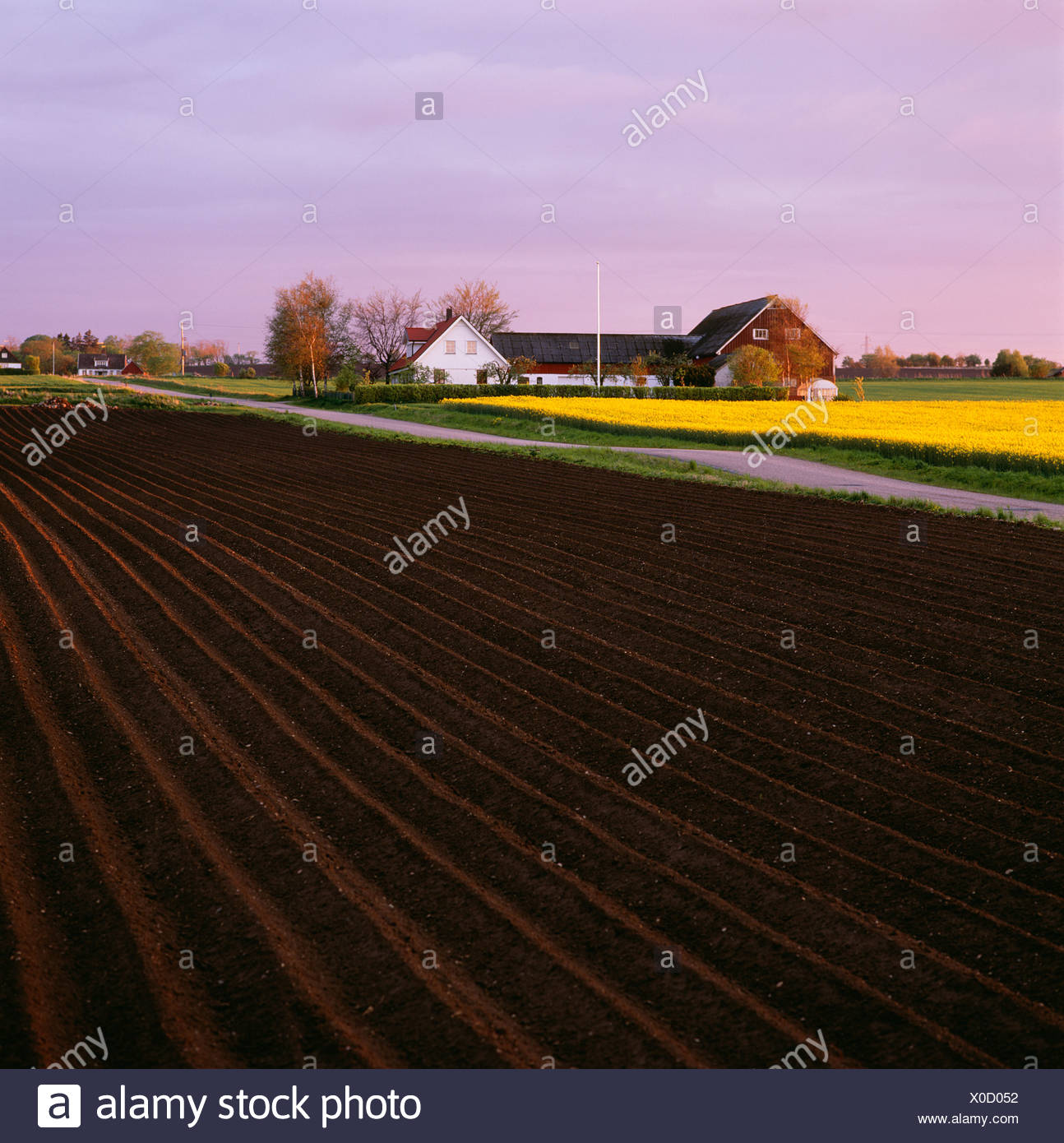 Fields and a farm, Sweden. - Stock Image