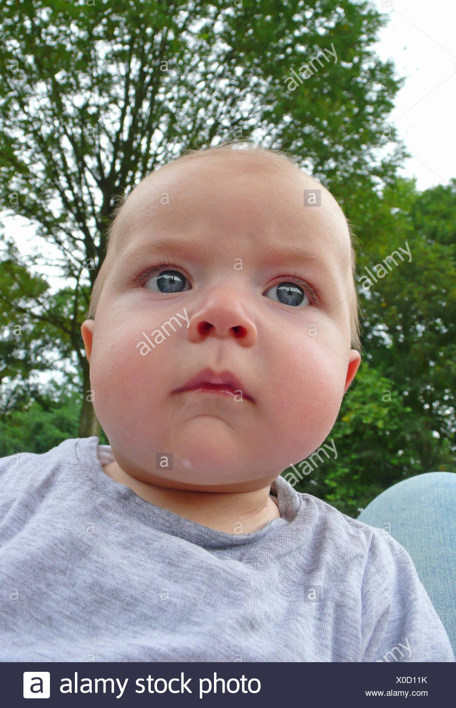 chubby-faced baby, portrait - Stock Image
