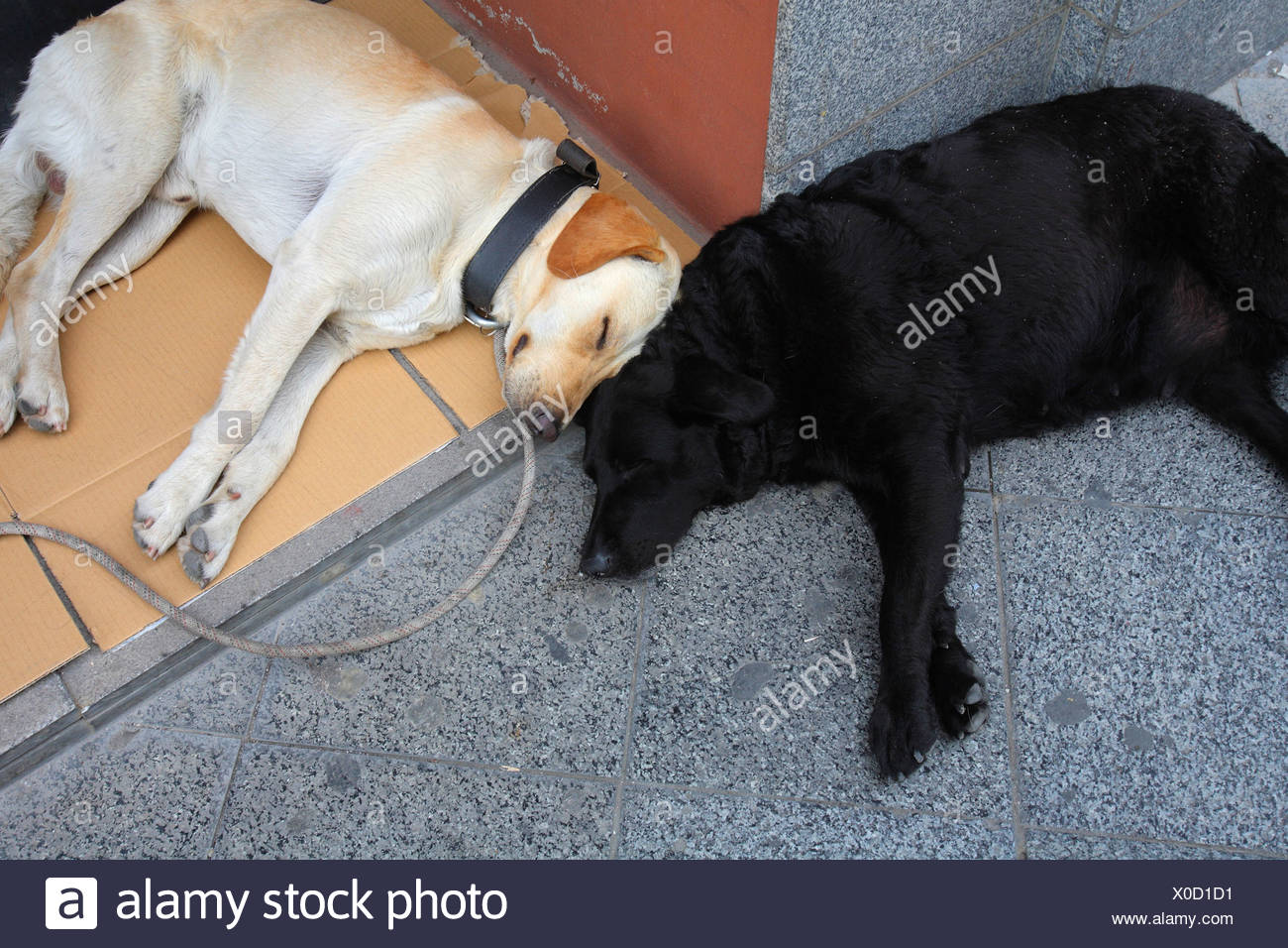 Let sleeping dogs lie two sleeping dogs - Stock Image