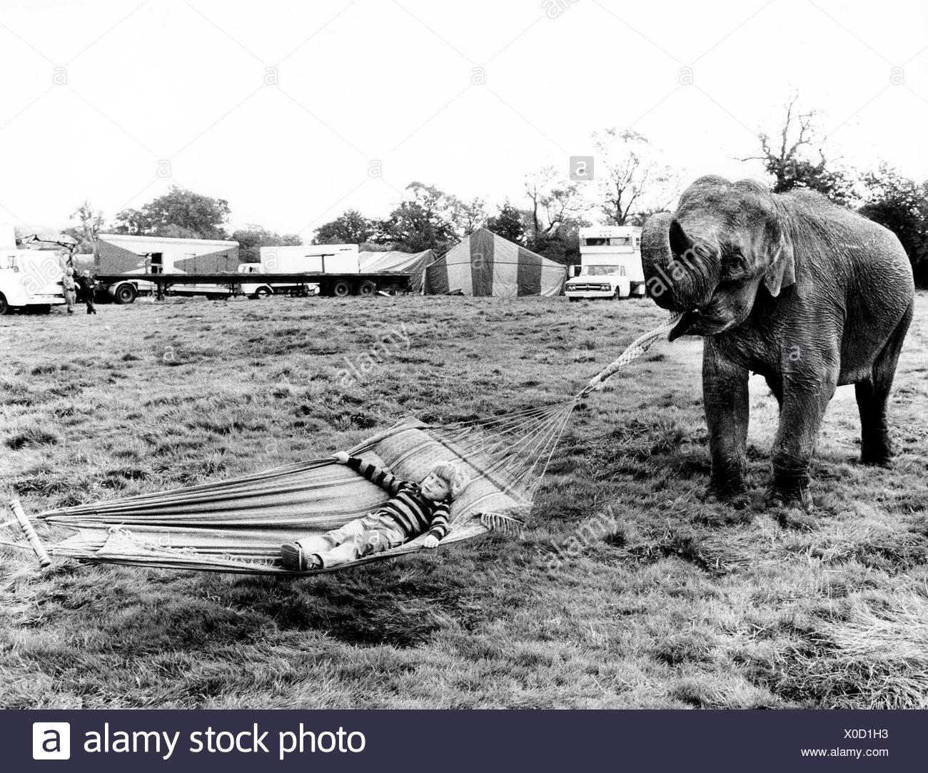 Elephant holds hammock, England, Great Britain - Stock Image