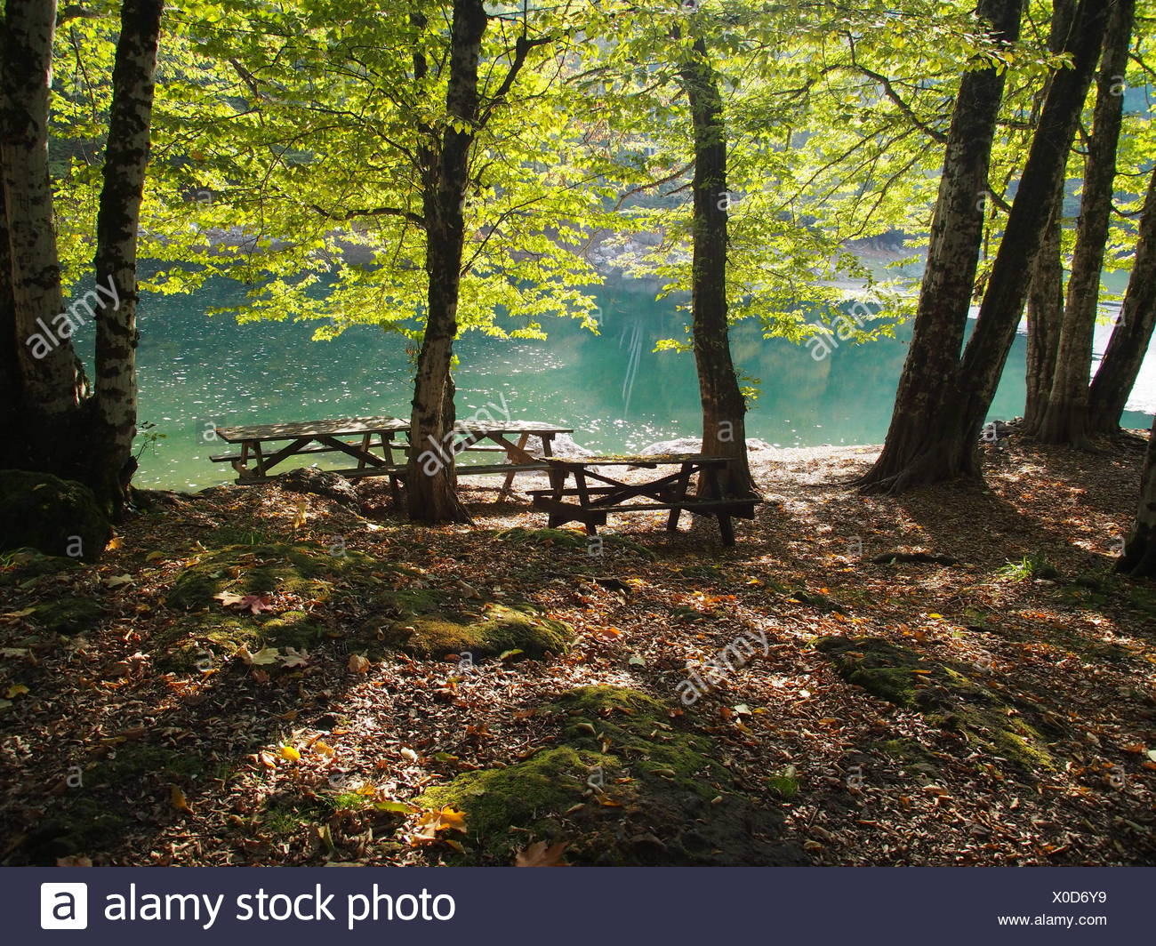 Trees on a riverbank, Yedigoller, Turkey - Stock Image