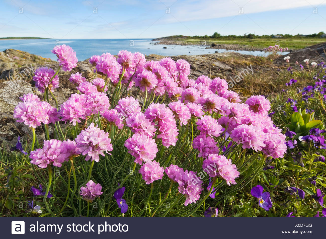 Close up of beautiful flowers on landscape with sea against sky in close up of beautiful flowers on landscape with sea against sky in background izmirmasajfo