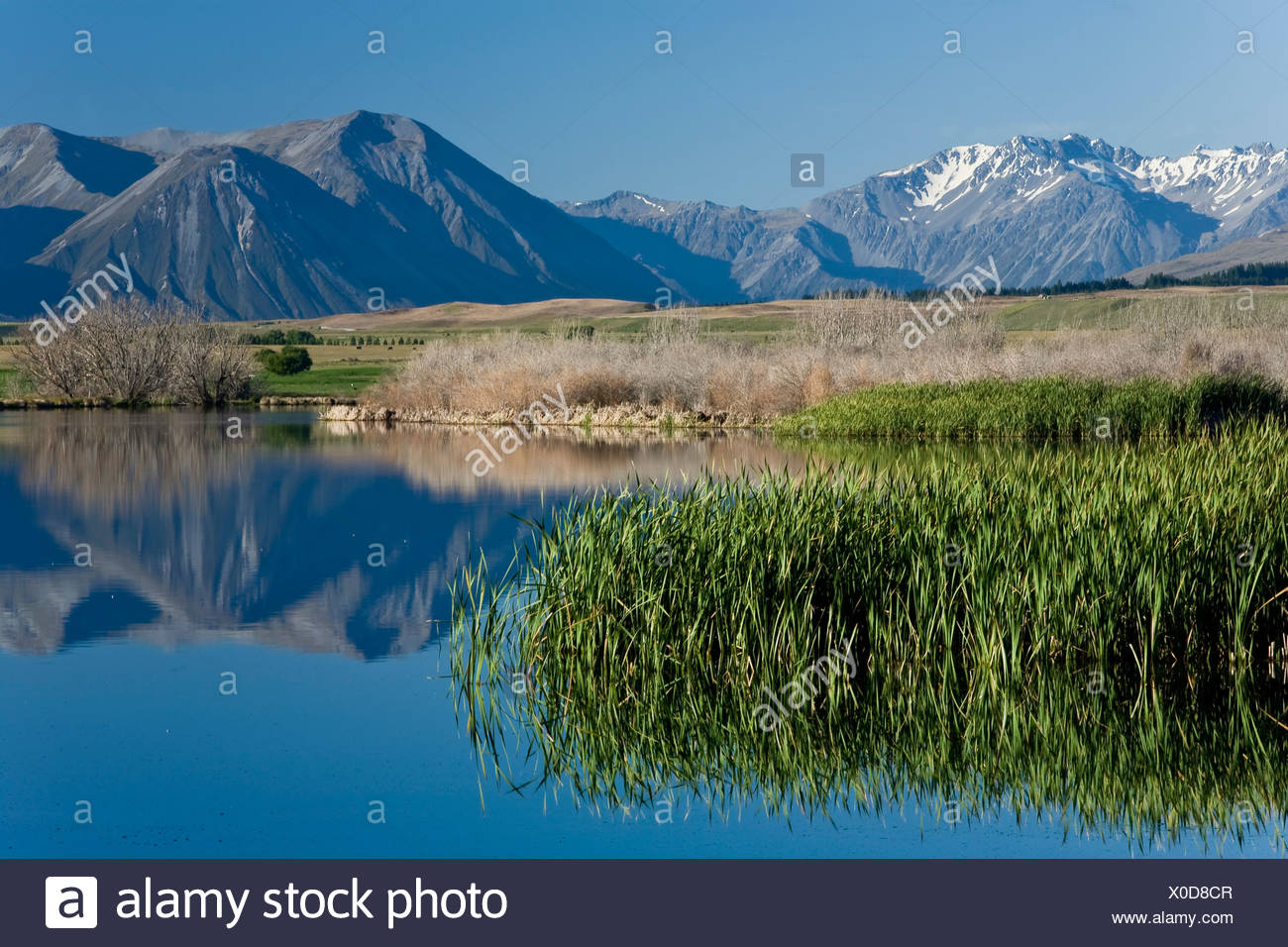 Water reflections on the banks of Lake Maoris in the morning light, South Island, New Zealand Stock Photo