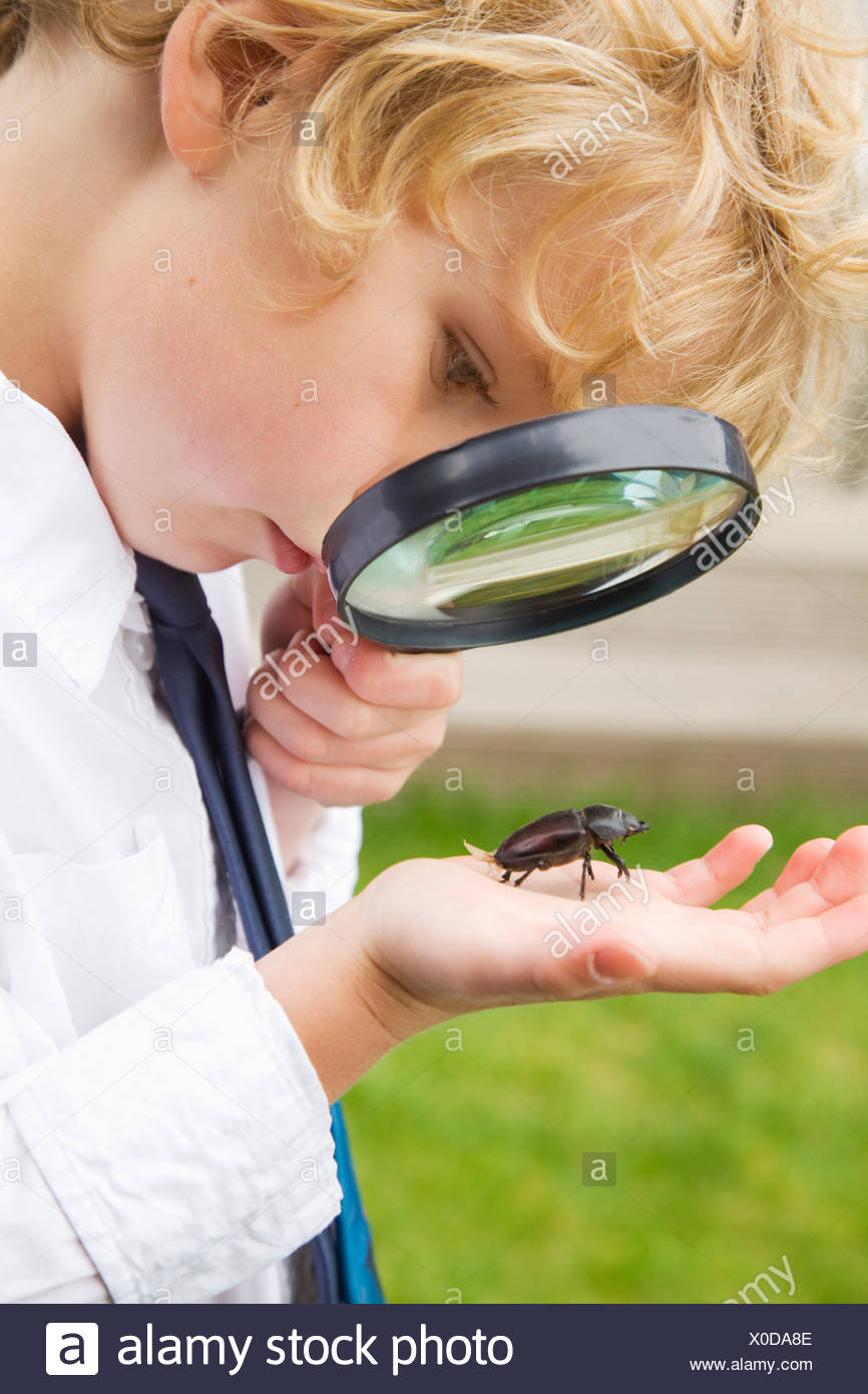 Boy examining bug with magnifying glass - Stock Image