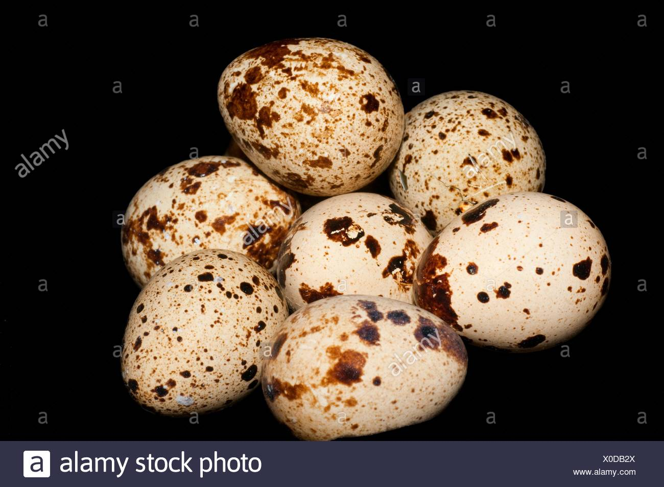 Quail eggs. - Stock Image