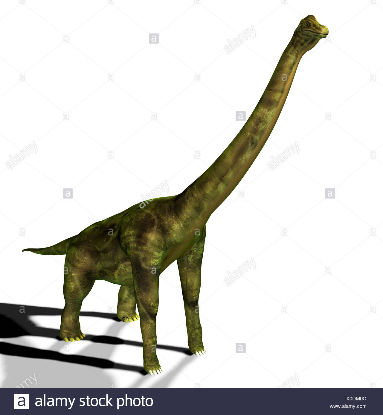 The brachiosaurus seemed also to arm lizard mentioned in the jurassic, had a weight of approx. 80 tons, a length of approx. 23 m - Stock Image