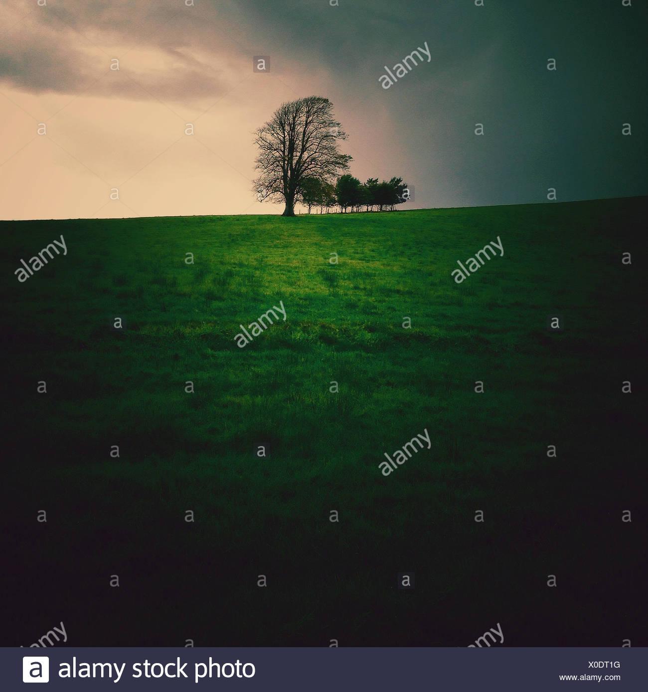 Ireland, Munster, County Kerry, Killarney, Trees on hill Stock Photo