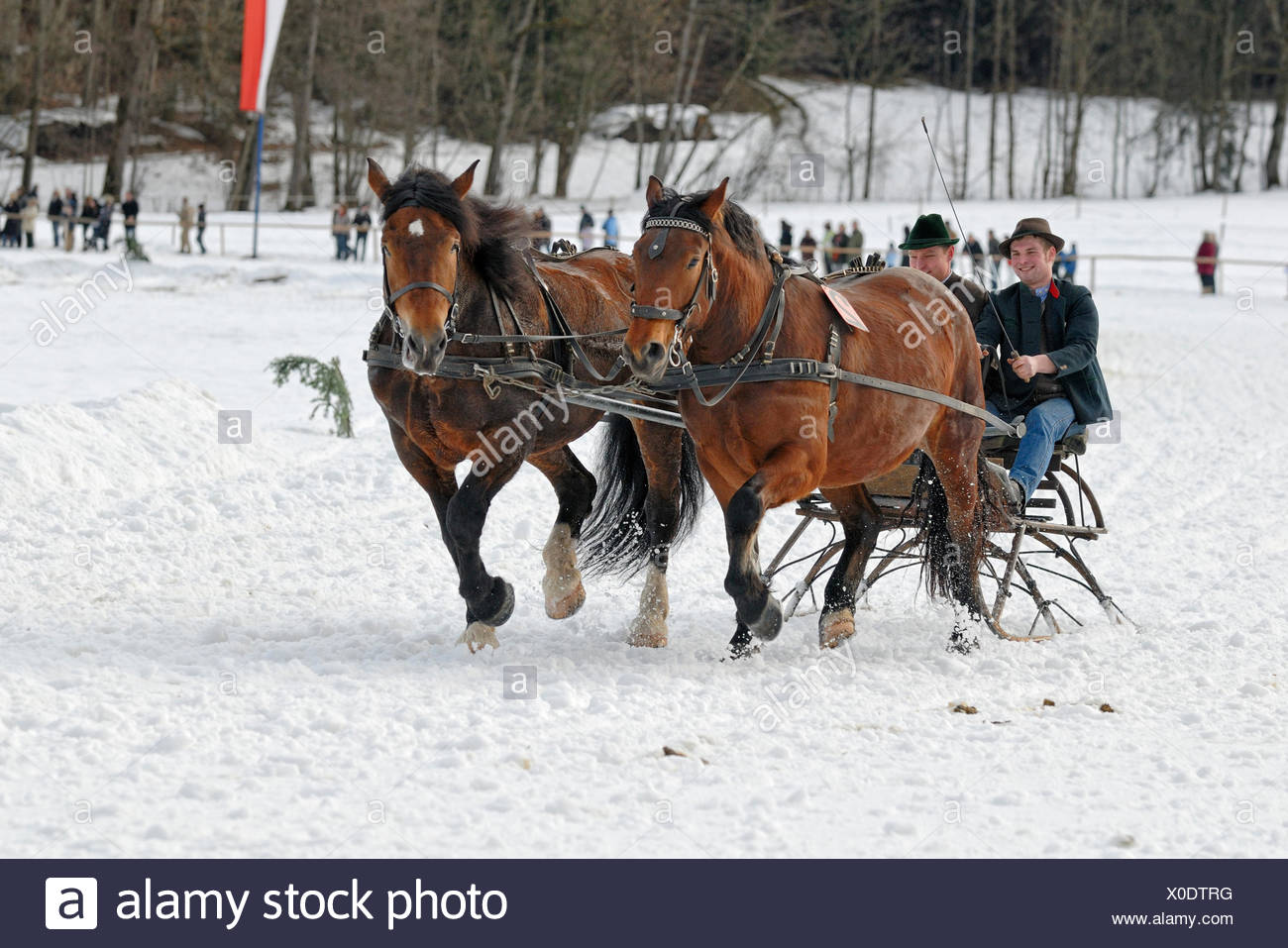 Sleigh race for Oberlaender carriage and pairs in Parsberg, Upper Bavaria, Bavaria - Stock Image