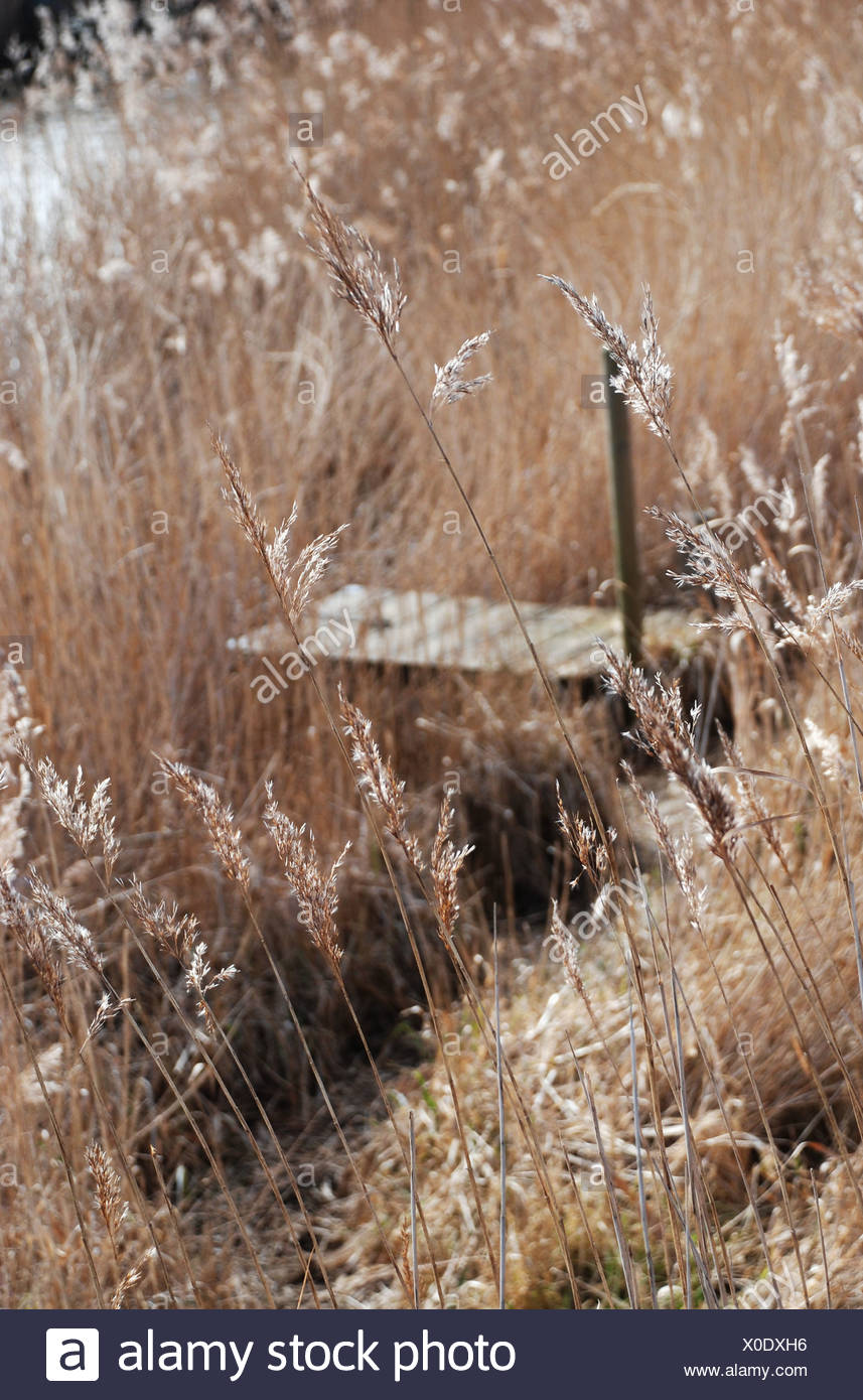 Late summer meadow - Stock Image