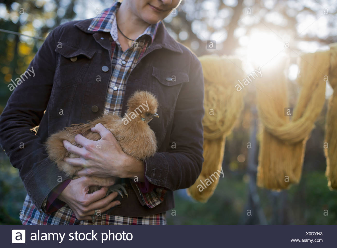 A woman holding a small brown fluffy chicken washing line Autumn sunshine filtering through trees - Stock Image