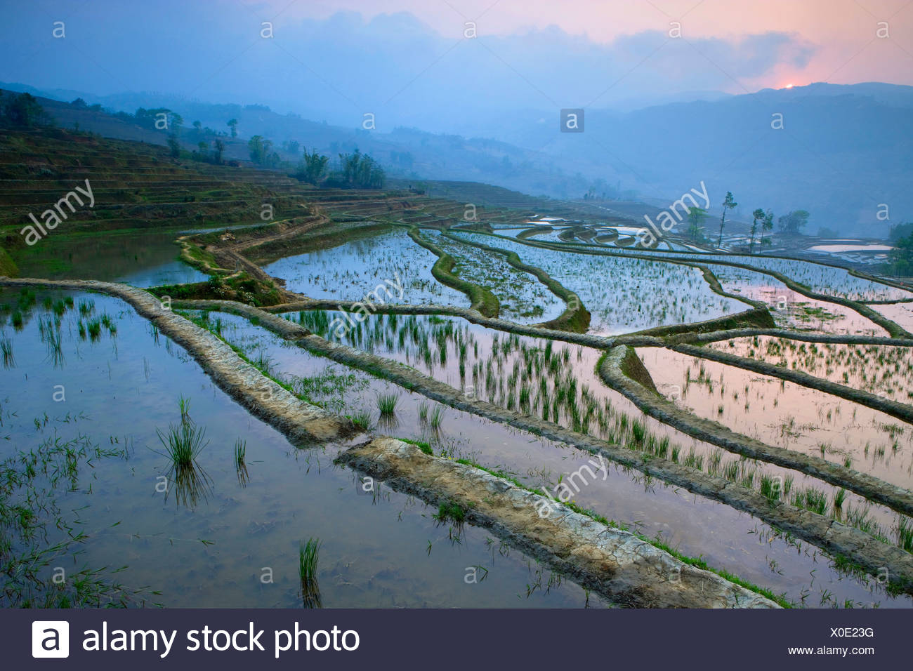 Yuanyang, China, Asia, rice terraces, growing of rice, rice fields, agriculture, water, morning light, sunrise, fog, spring - Stock Image