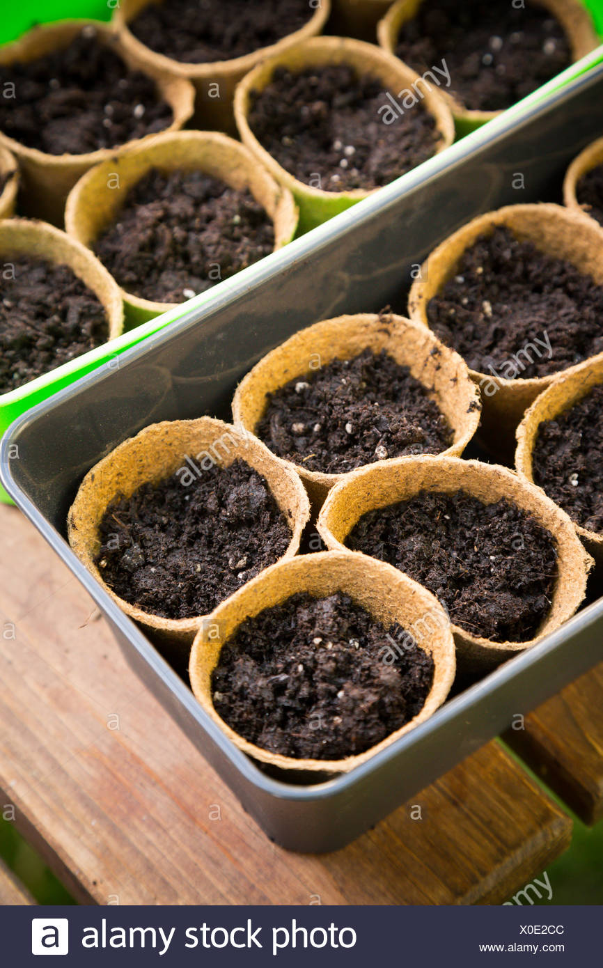Plastic boxes with nursery pots - Stock Image