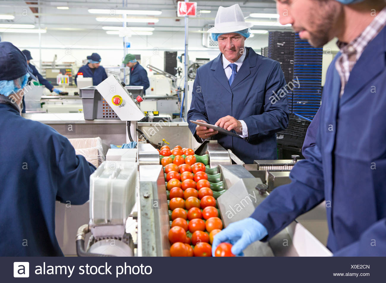 Quality control workers inspecting ripe red tomatoes on production line in food processing plant - Stock Image