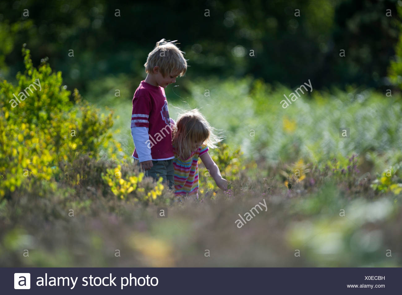 Brother and sister exploring a heath Norfolk summer - Stock Image