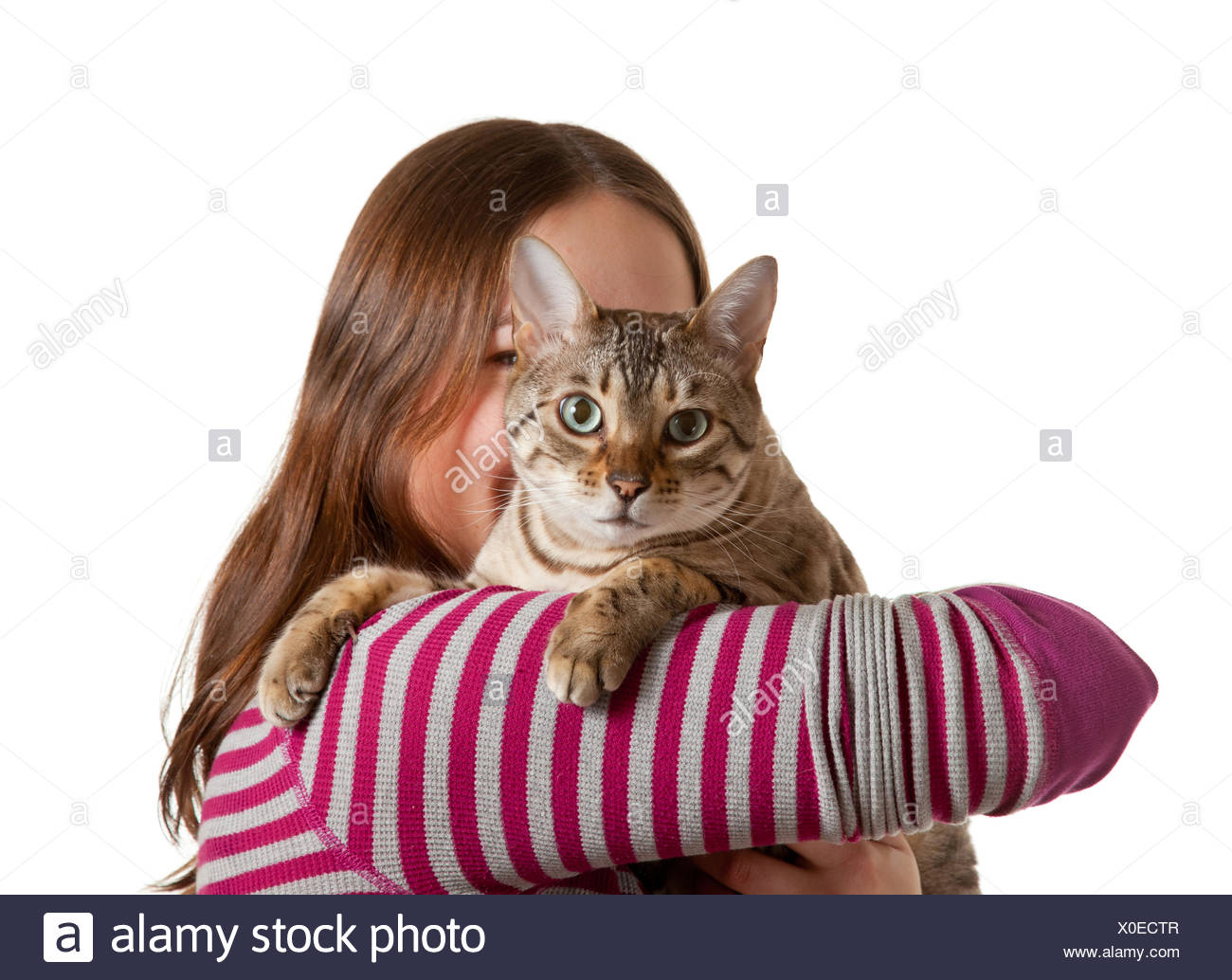 Bengal kitten on arm of young girl facing camera Stock Photo