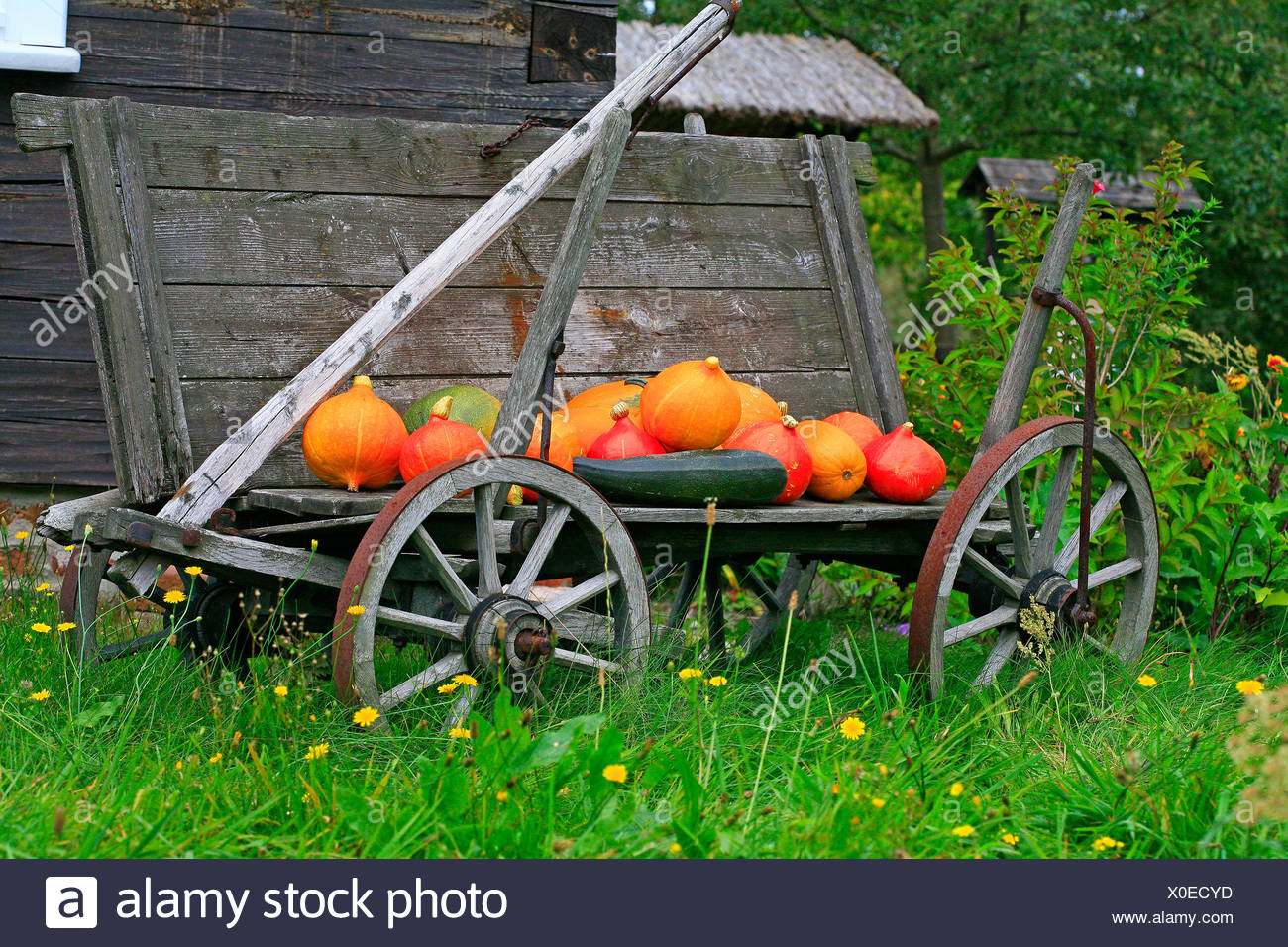 Old cart, pumpkins as decoration - Stock Image
