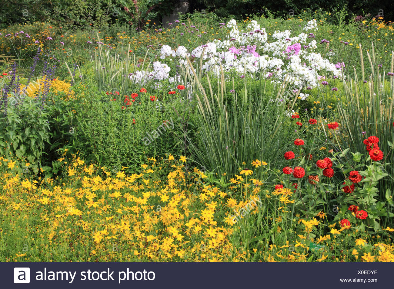 Garden with oxeye in summer Stock Photo