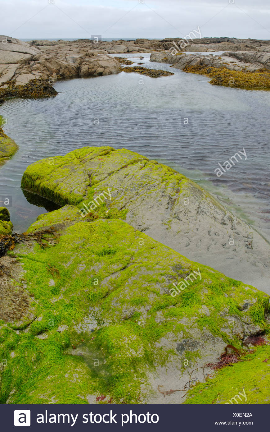 Tidal ponds at the Atlanic coast of Donegal at low tide with granite rocks covered by llight green algae, Ireland Stock Photo